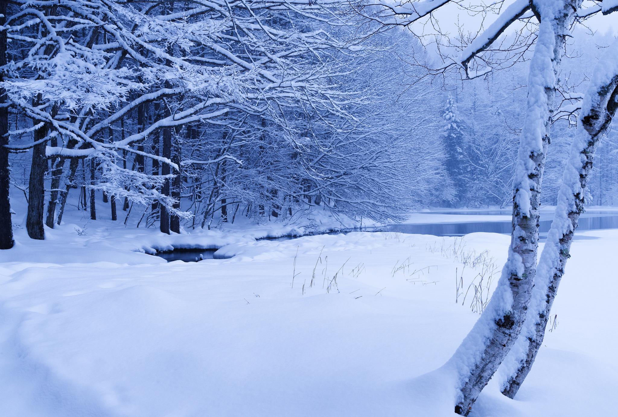 Лес ручей пруд зима снег деревья