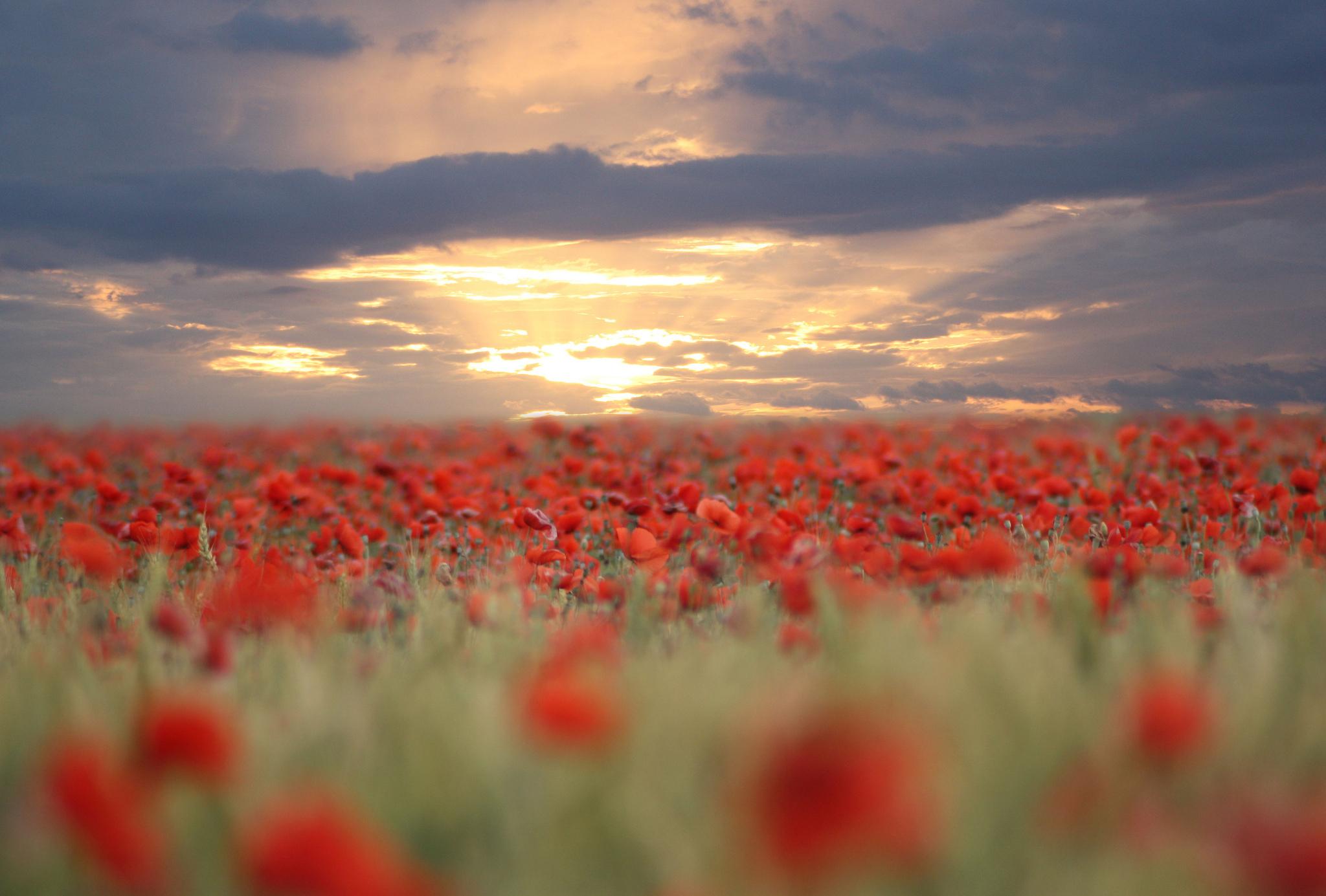 закат небо полевые растения  № 963489  скачать