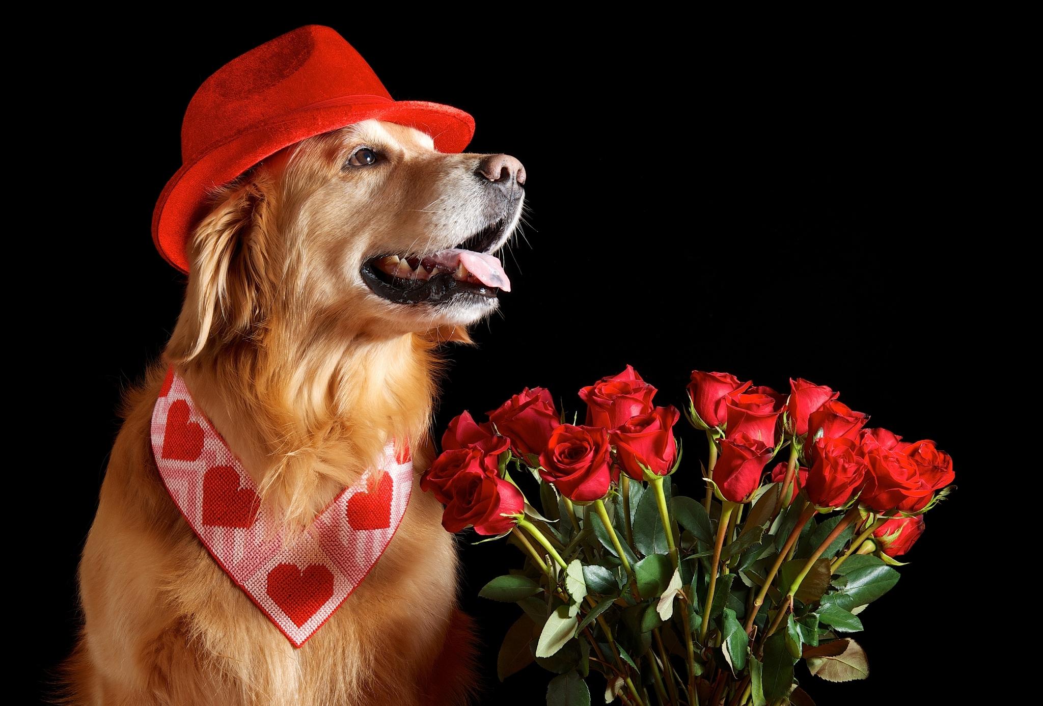 Днем рождения, поздравительная открытка собака