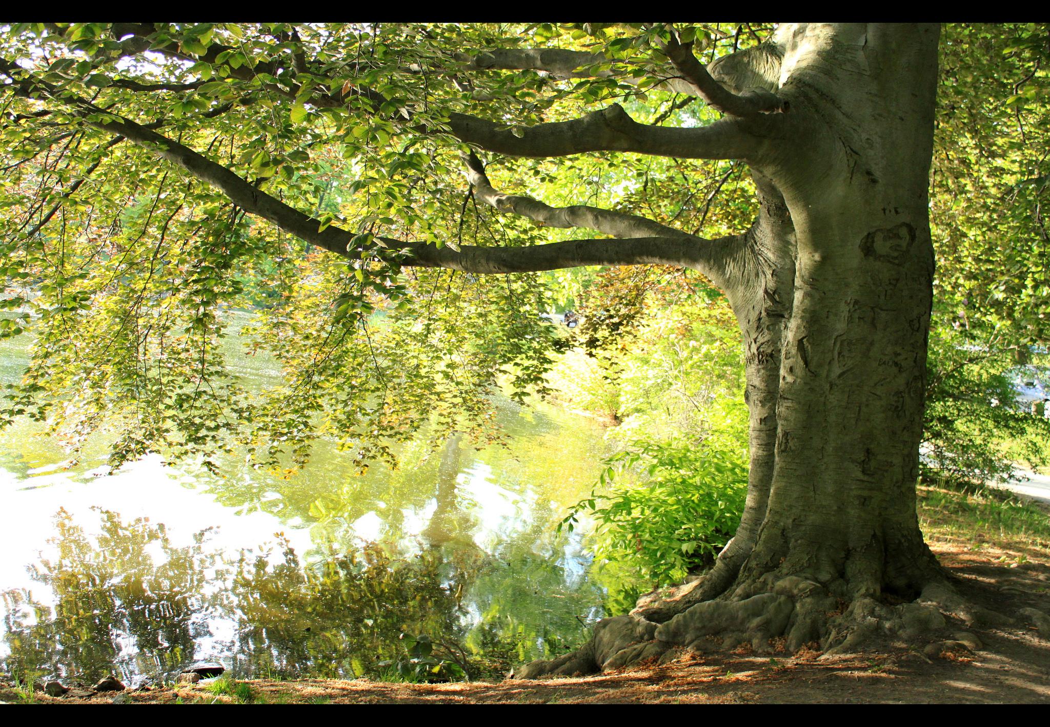 деревья природа ветка trees nature branch  № 439606 без смс