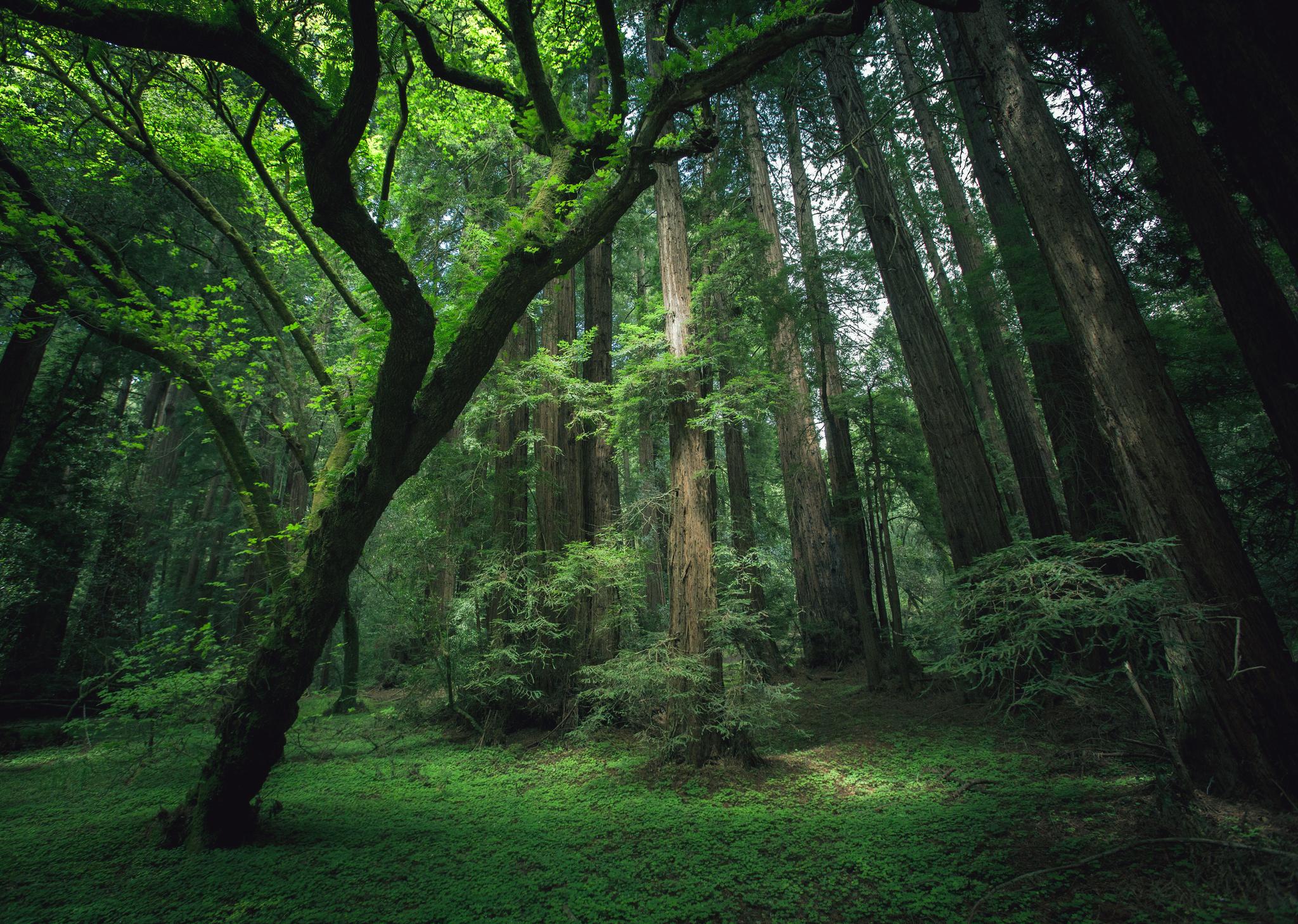 зелень лес деревья  № 1078692 загрузить