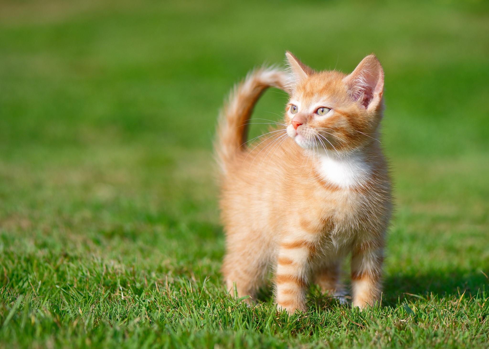 Рыжий котенок картинки фото, днем