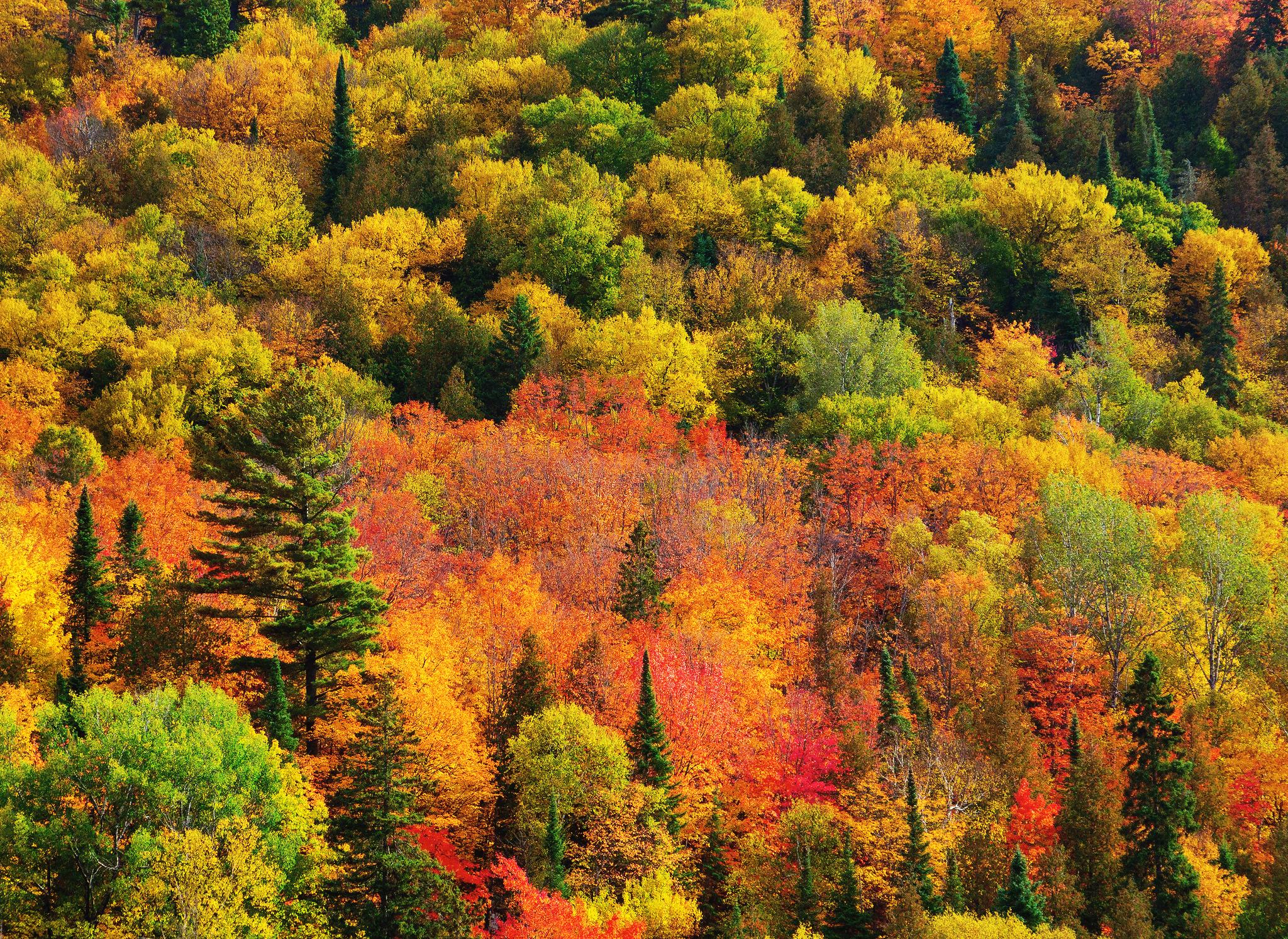 красота осеннего леса фото знали пустом