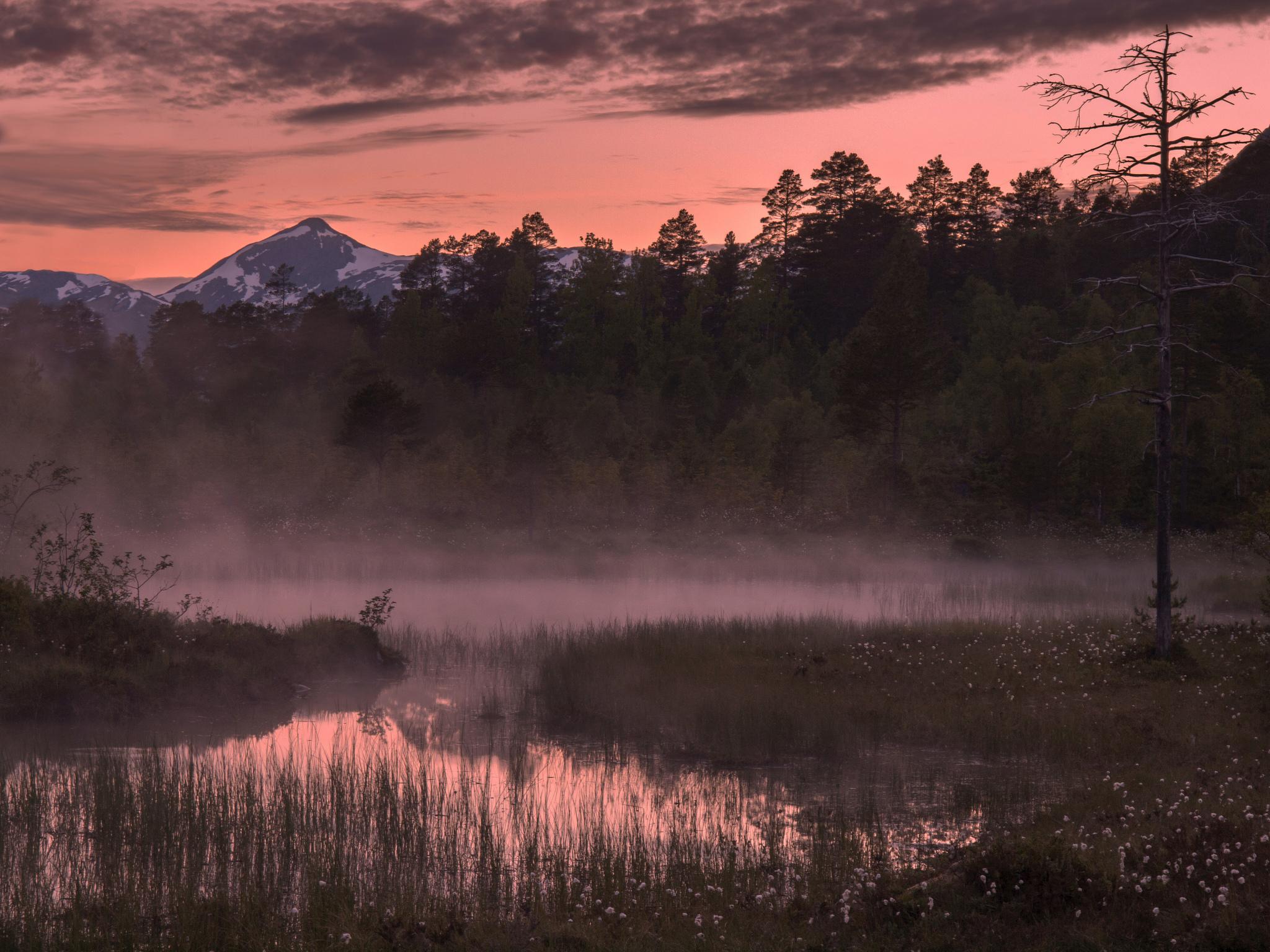 речка дерево зелень вечер туман  № 452920 бесплатно
