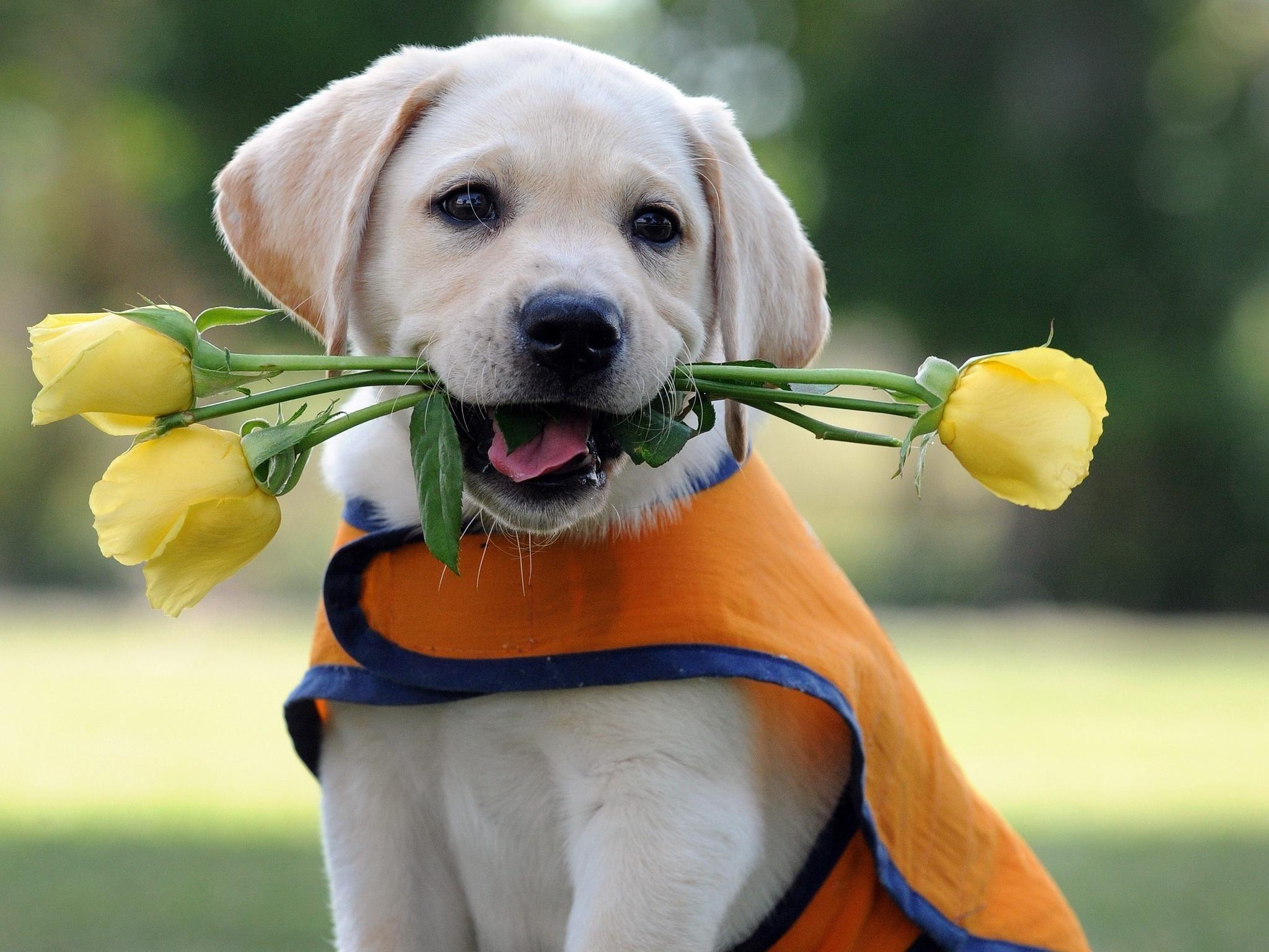 Открытка собачка с цветочком, средневековые