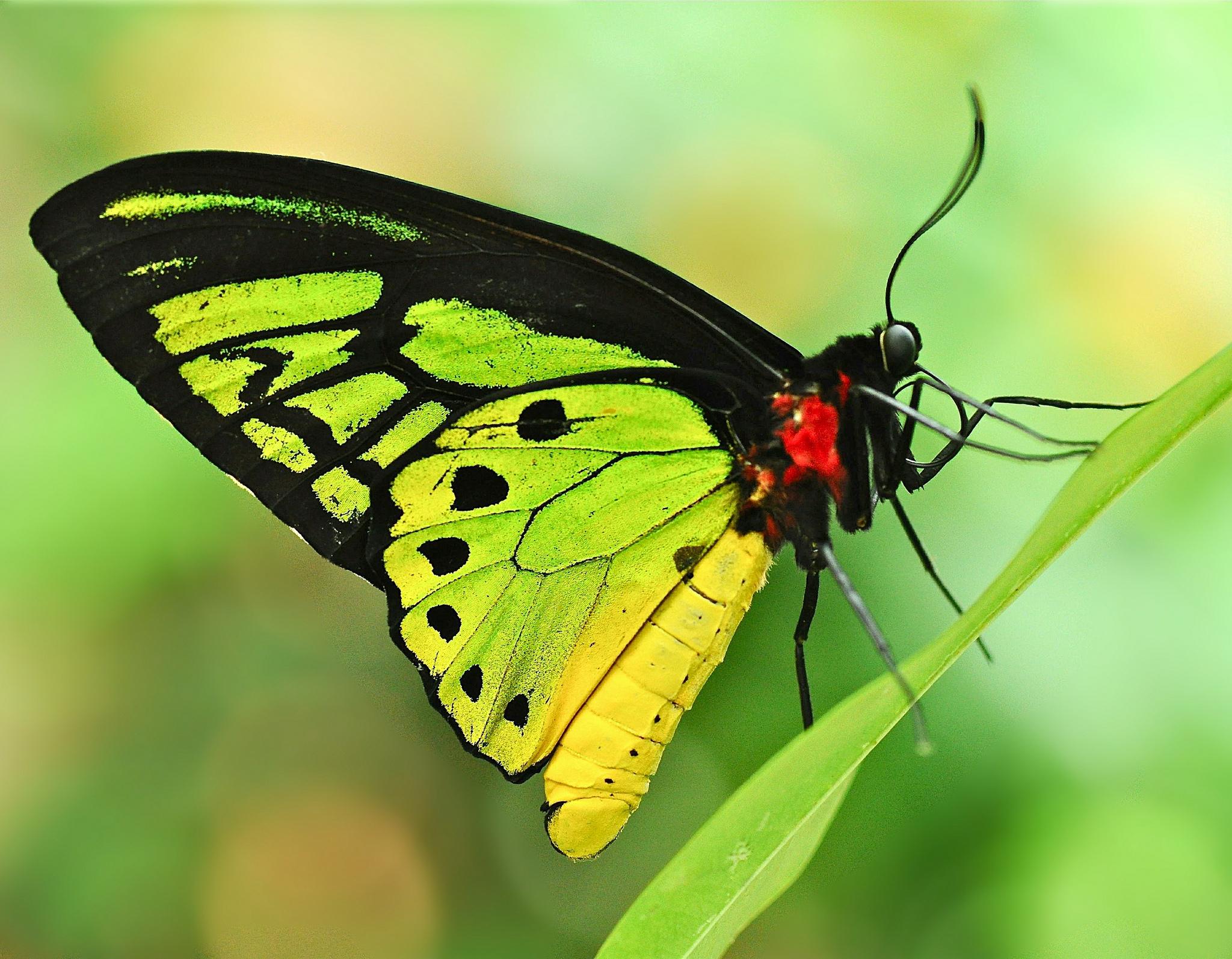 бабочка на зеленой траве  № 1396172 без смс