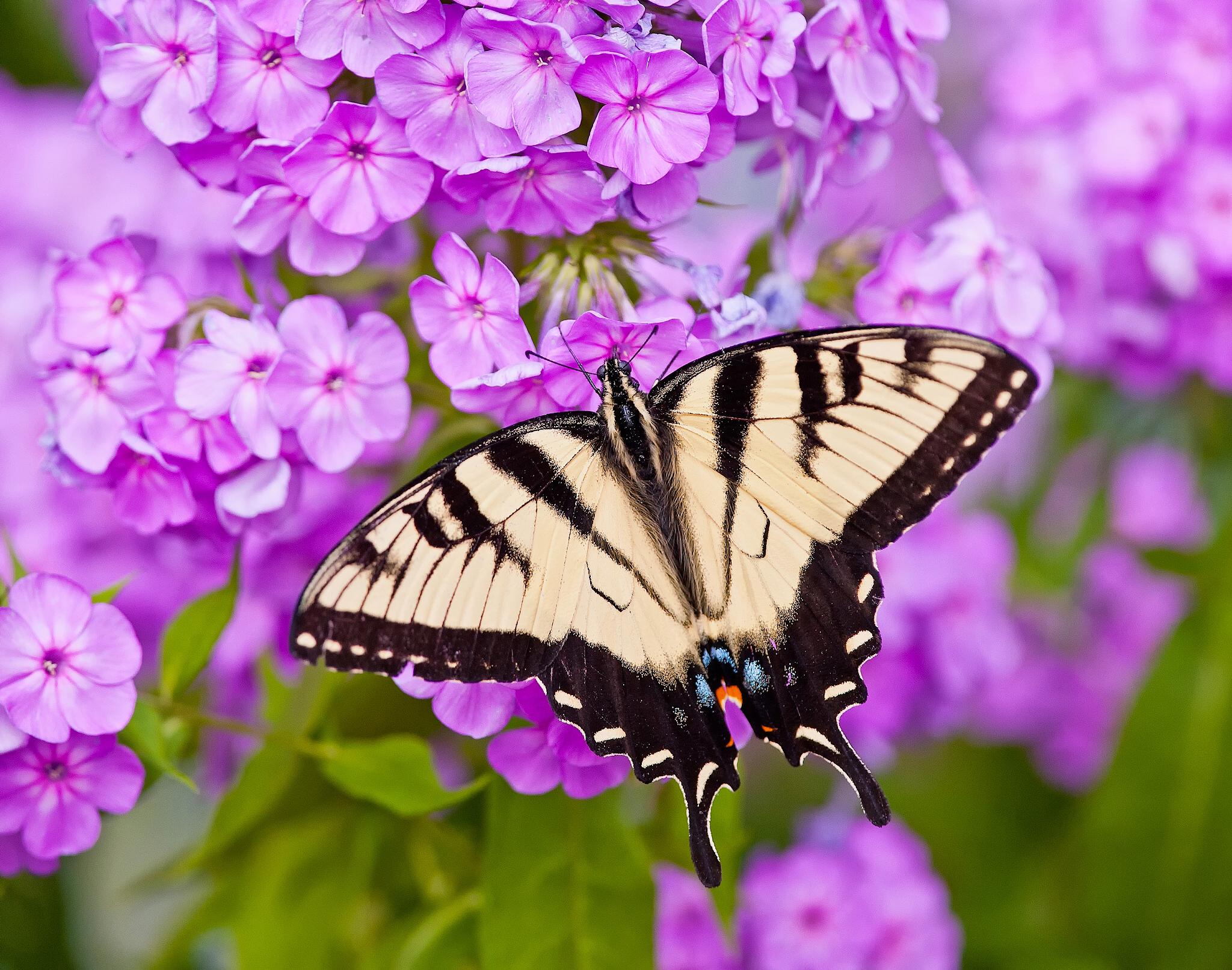 Картинка с бабочками