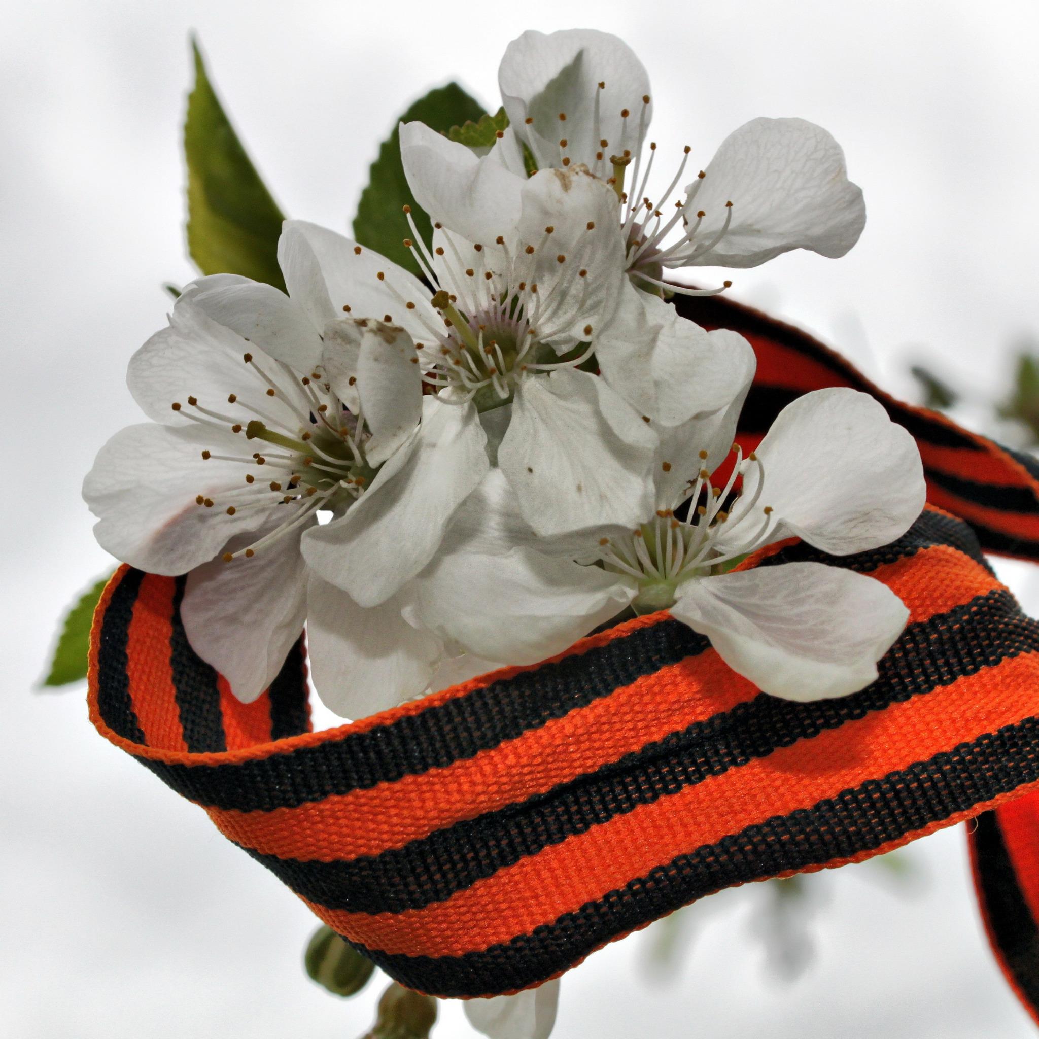 фото цветы лента используются
