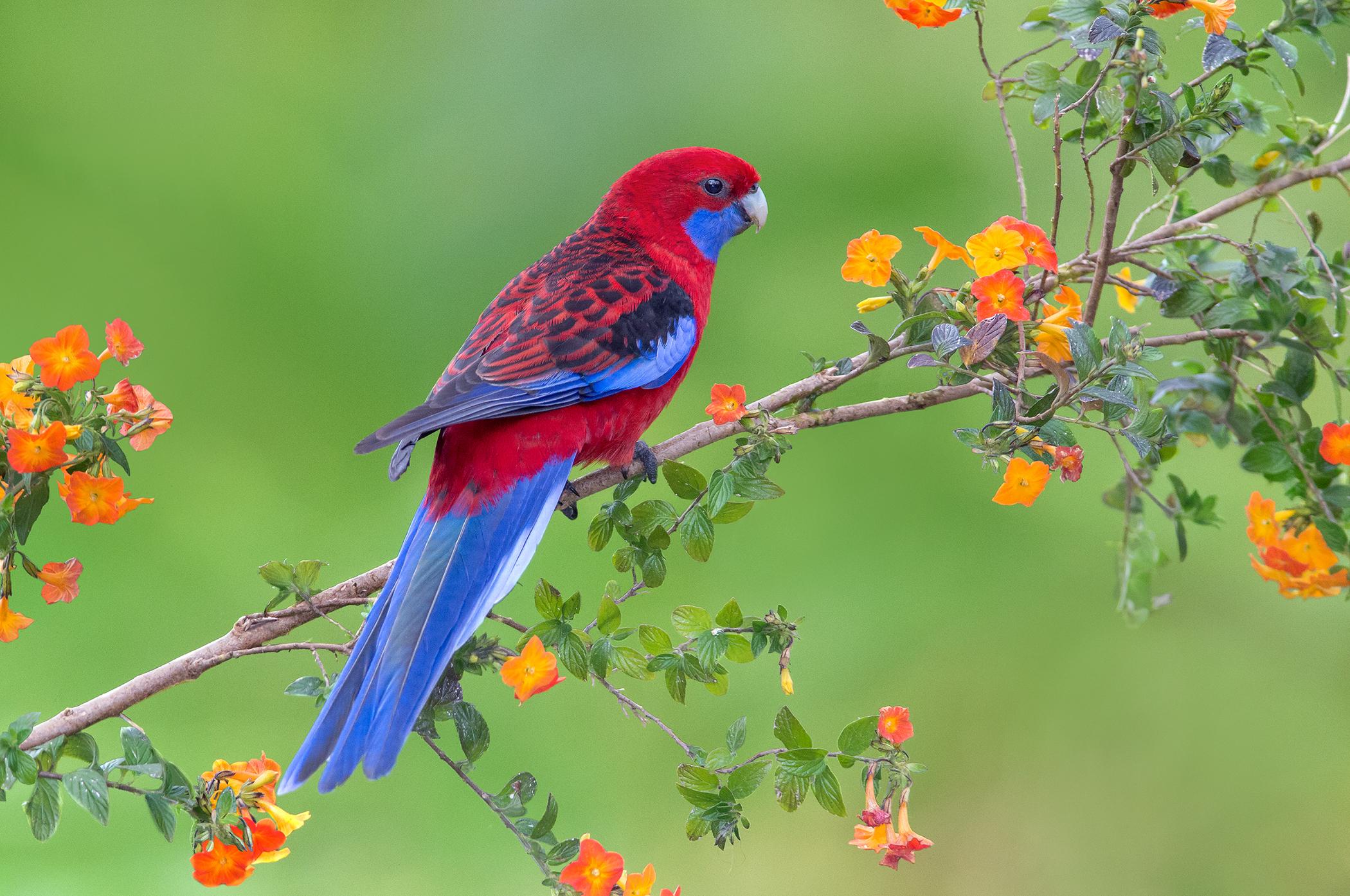 перенесении фото птиц на обои для рабочего стола зря