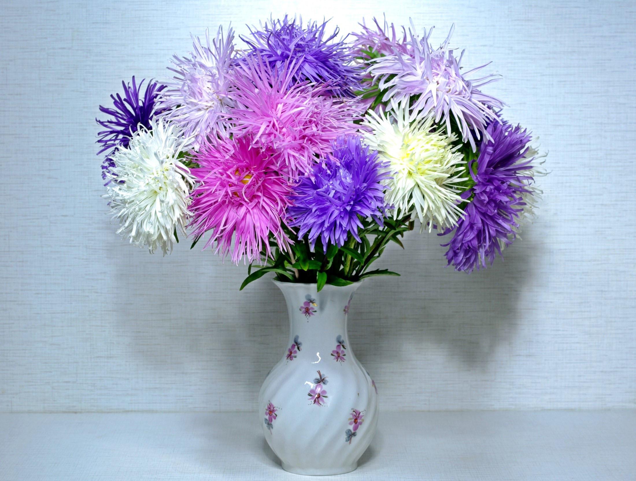 Картинки цветы астры красивые букеты