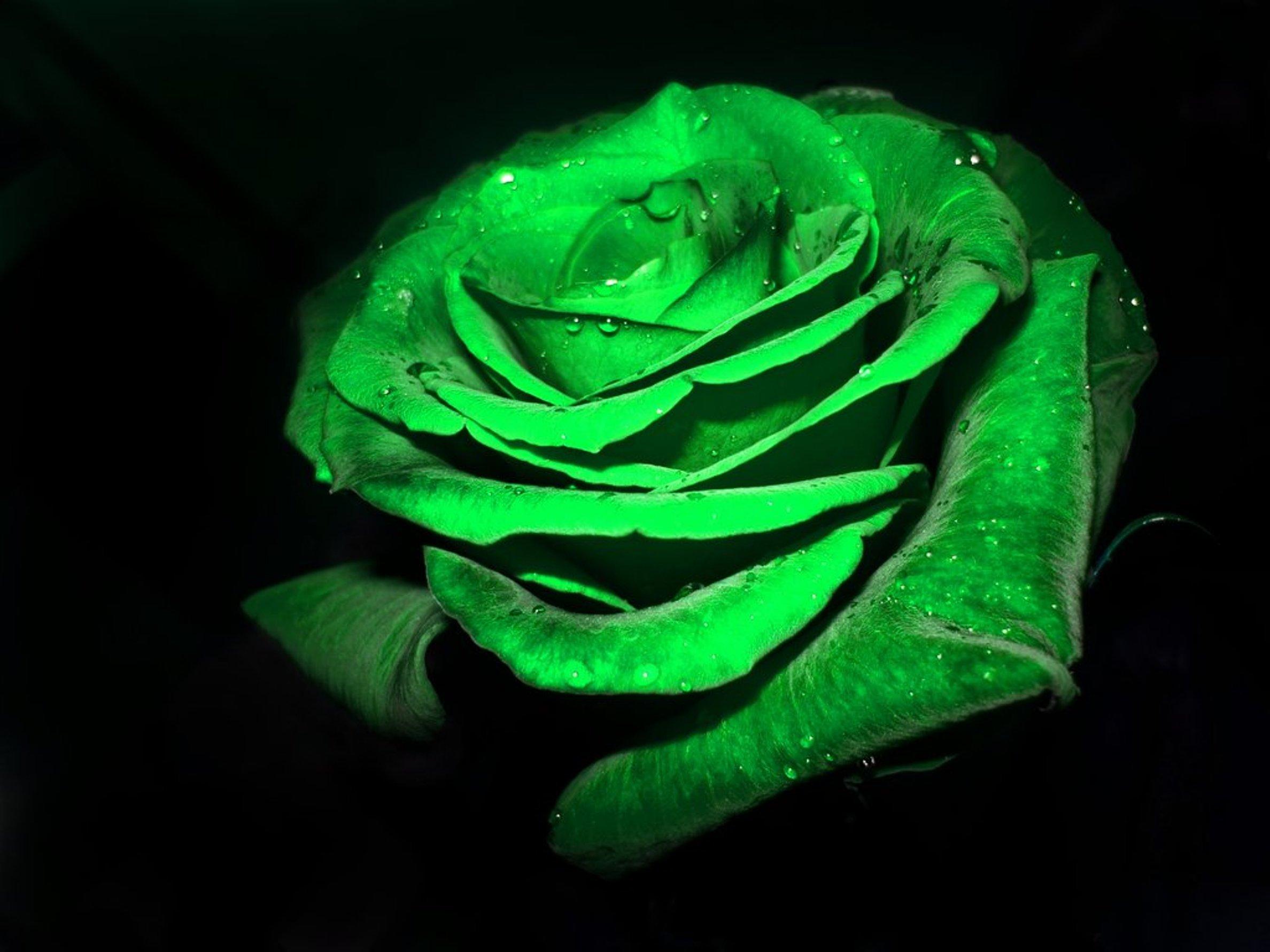 картинки с зеленым черным и белым цветом окна спальни