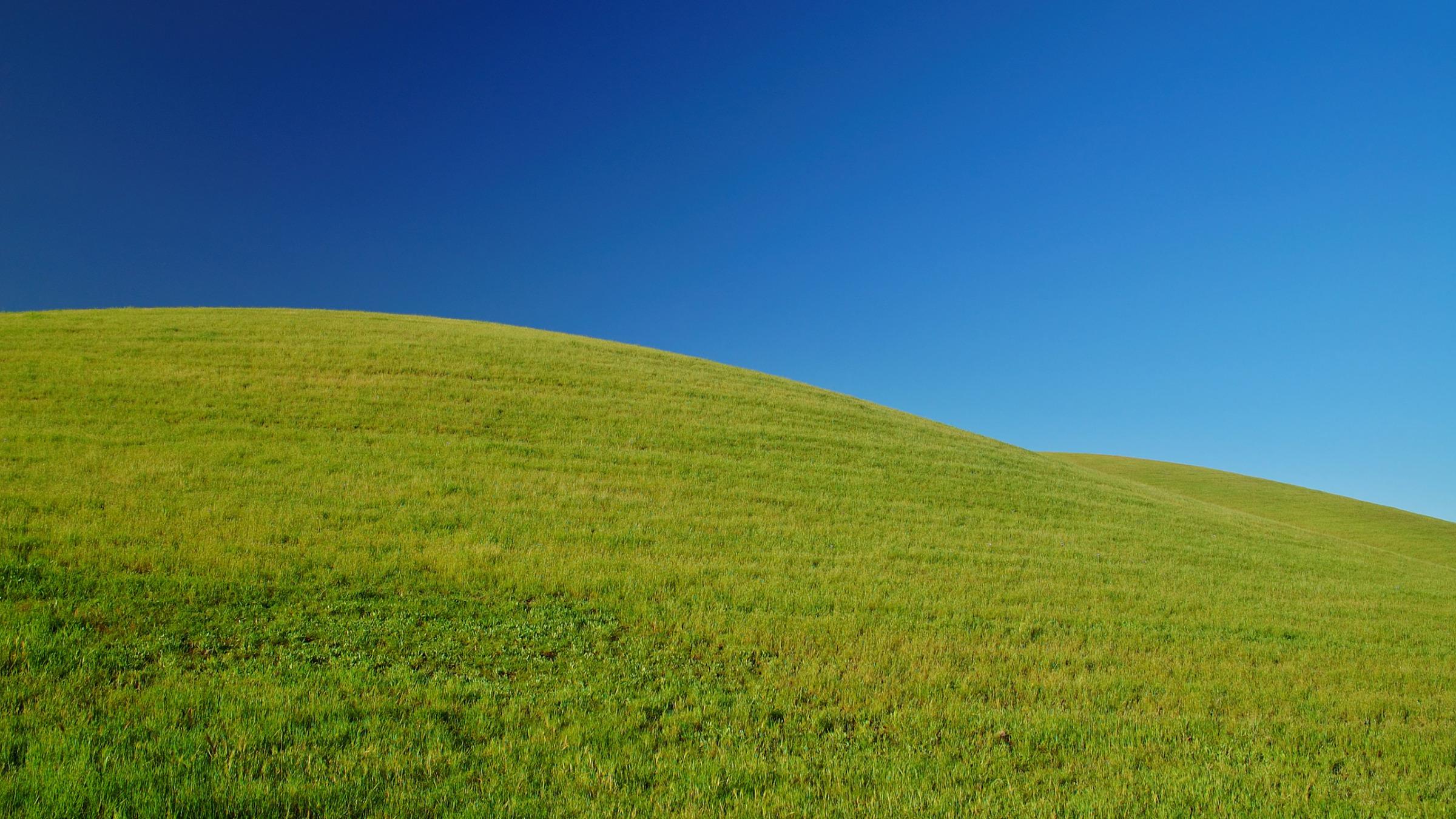природа поле трава зеленая  № 610469 без смс