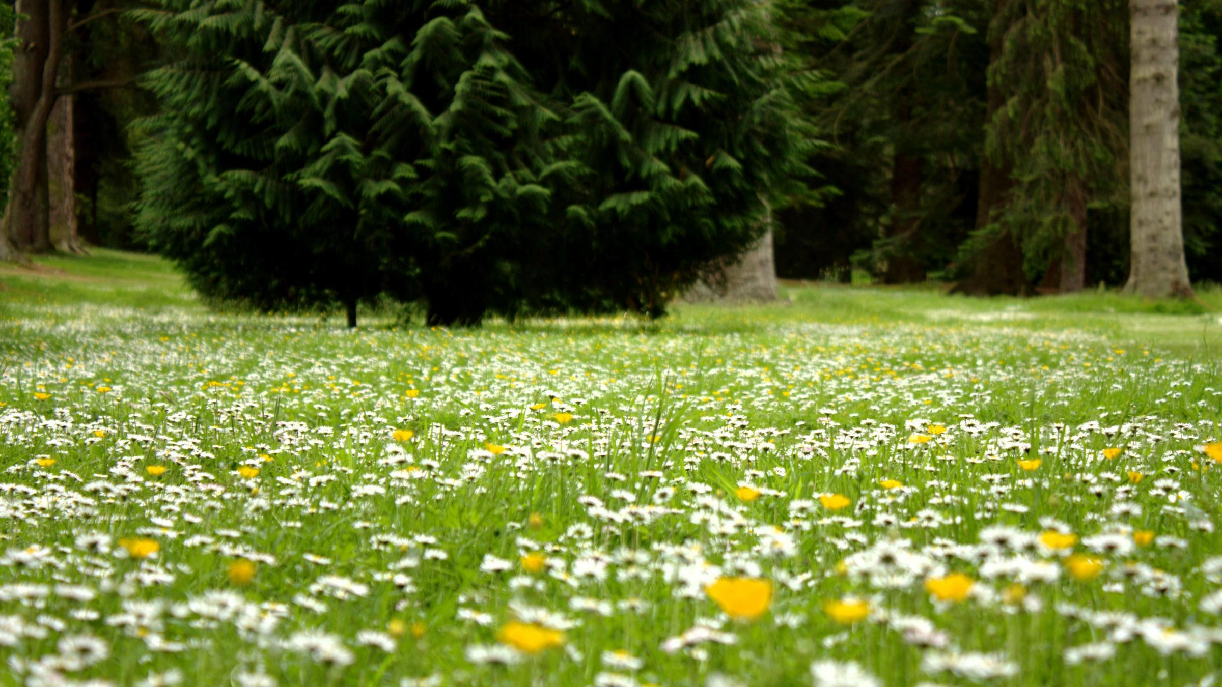 ТОП-7 самых красивых цветущих долин мира фото цветочных 65