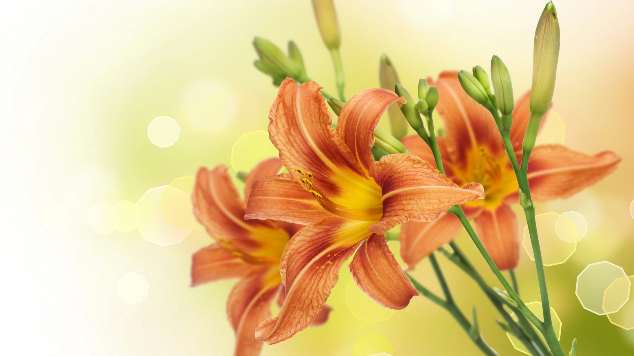 Открытки музыкой, картинки с днем учителя с цветами лилии