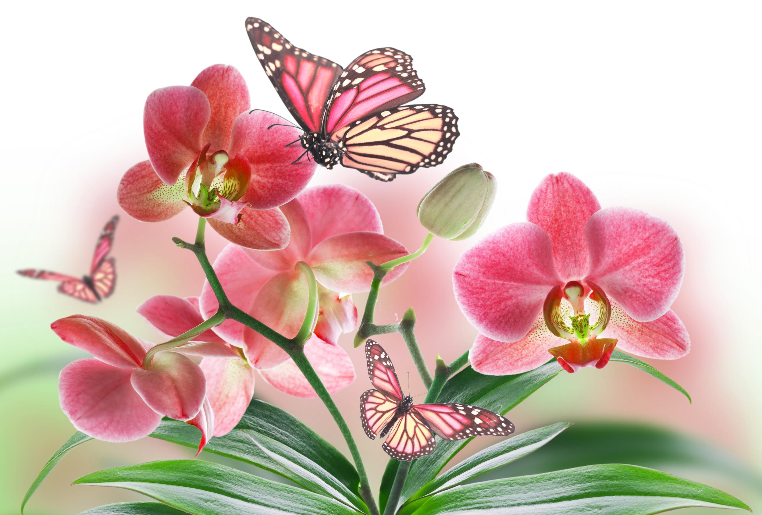 бабочки из лепестков  № 2303792 бесплатно