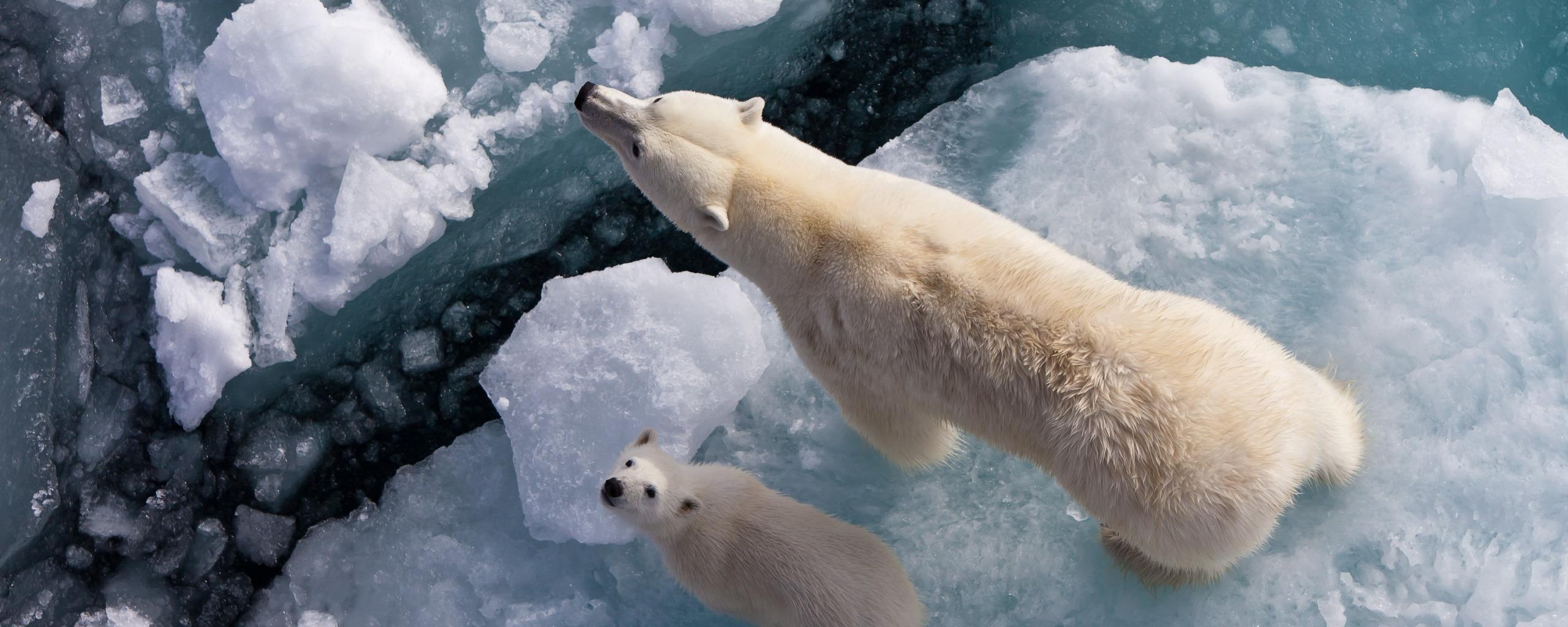 Смотреть фотографии пингвинов и белых мишек большую часть