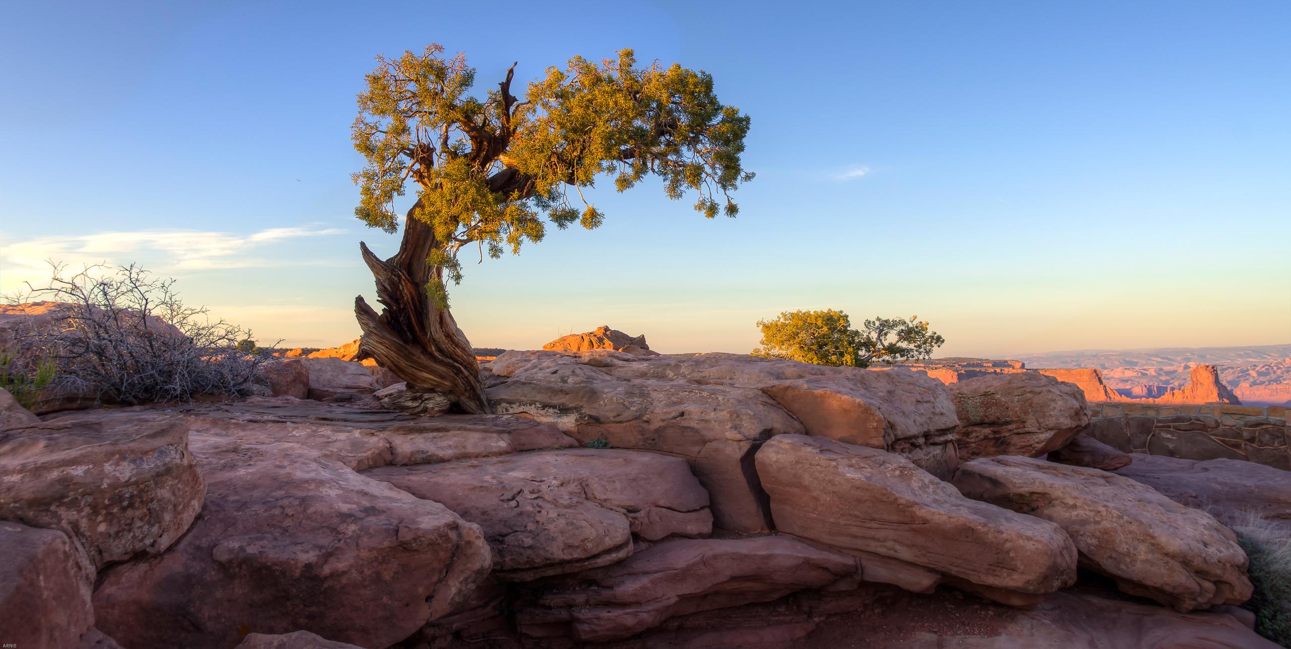 природа горы деревья скалы небо nature mountains trees rock the sky  № 379361 бесплатно