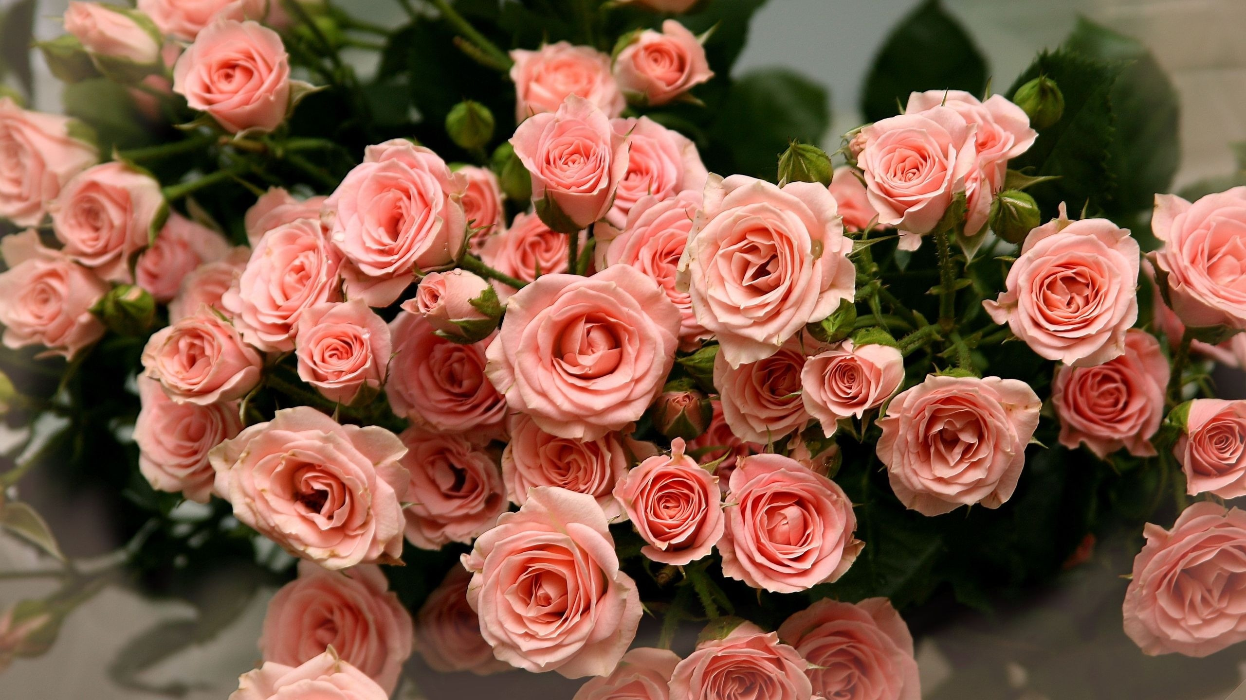 Обалденные розы для открытки, кошки спокойной ночи