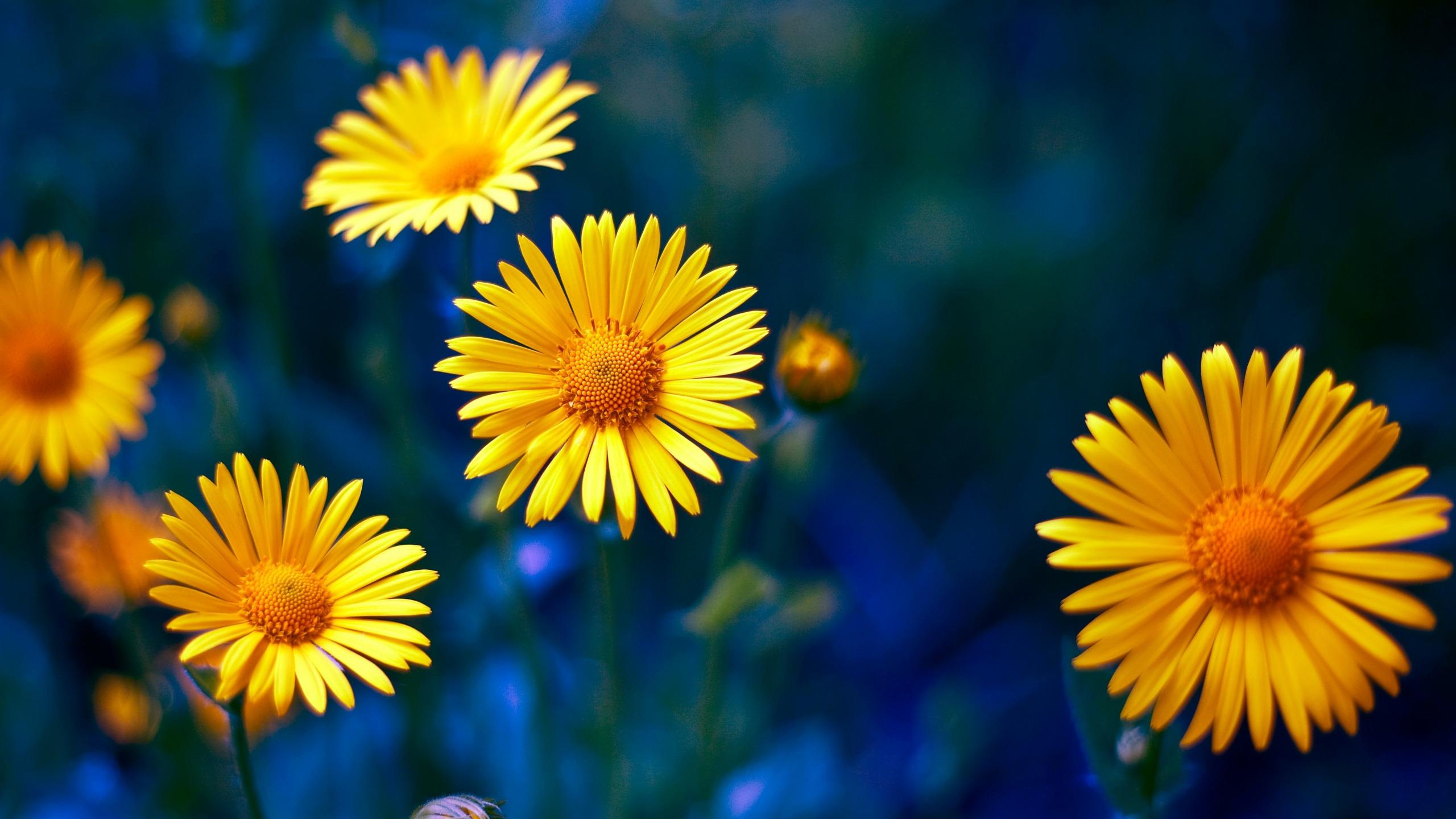 ветреных картинки желтые цветы на синем фоне наличии кухню