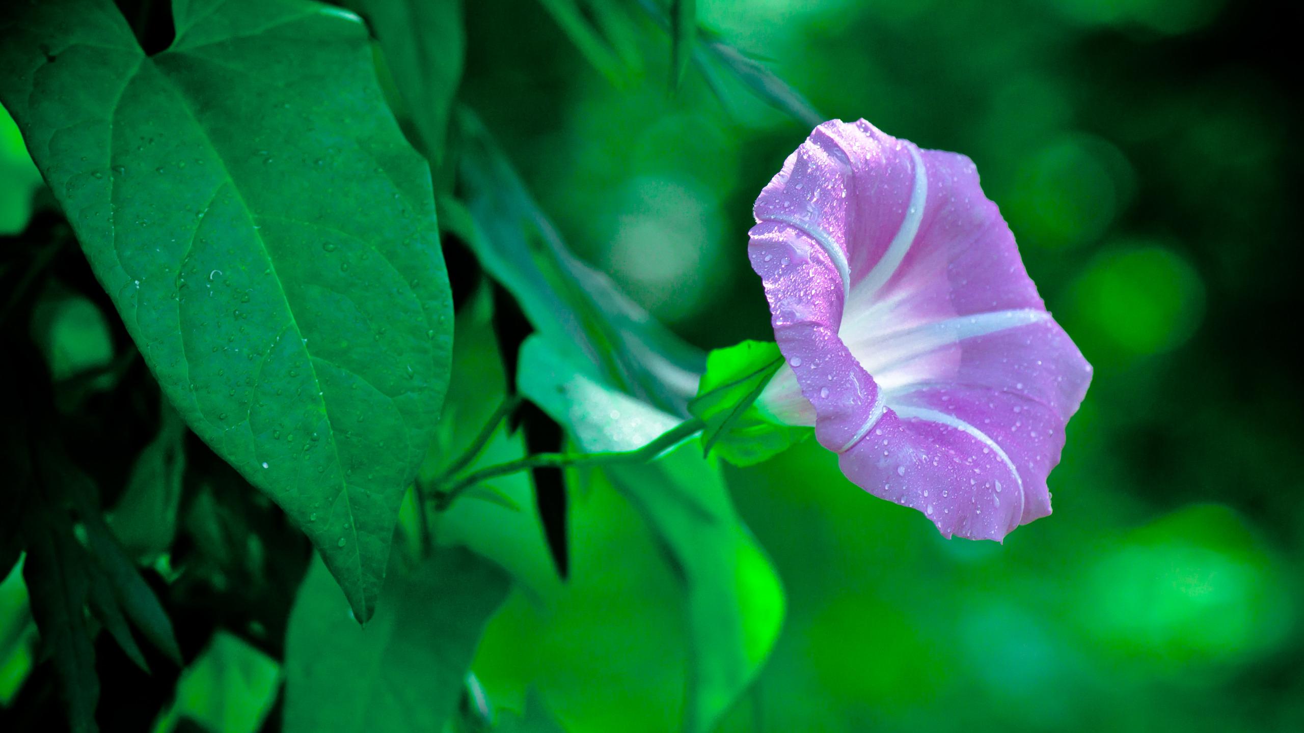 магазин картинки вьюн цветок группировка терпит