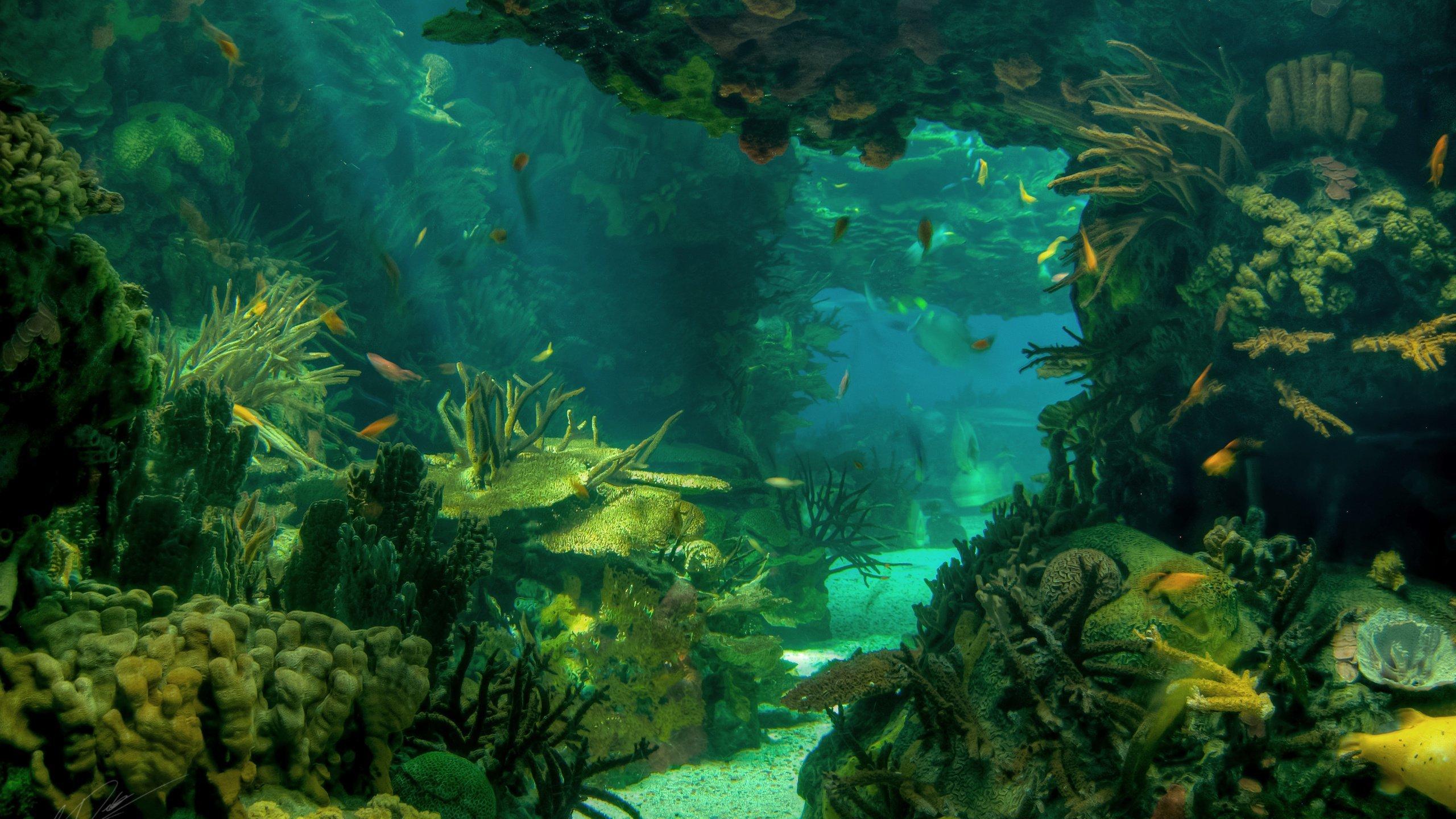 фотообои на рабочий стол глубины океана происходит