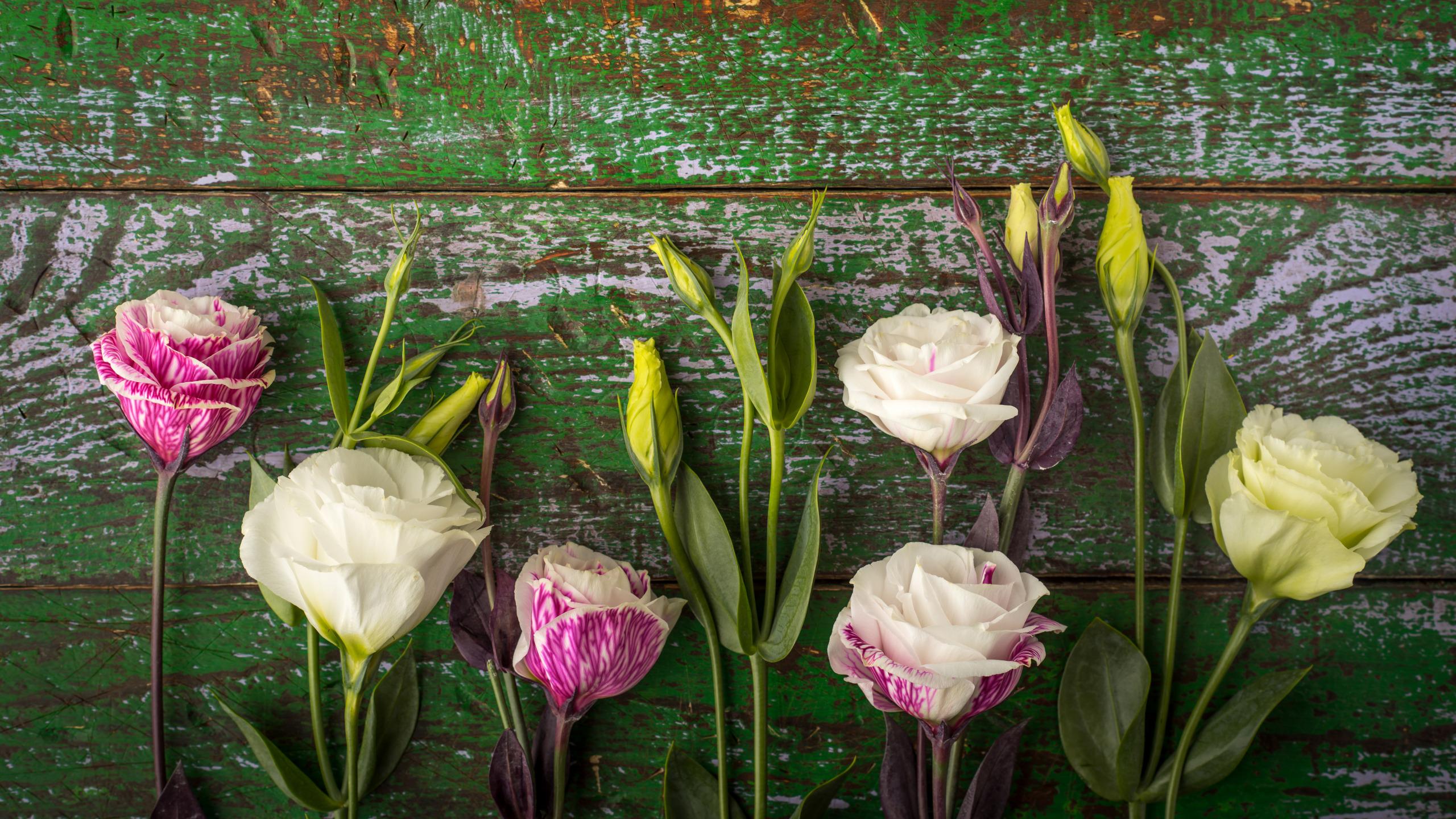 обои для рабочего стола эустома цветы № 634110 загрузить