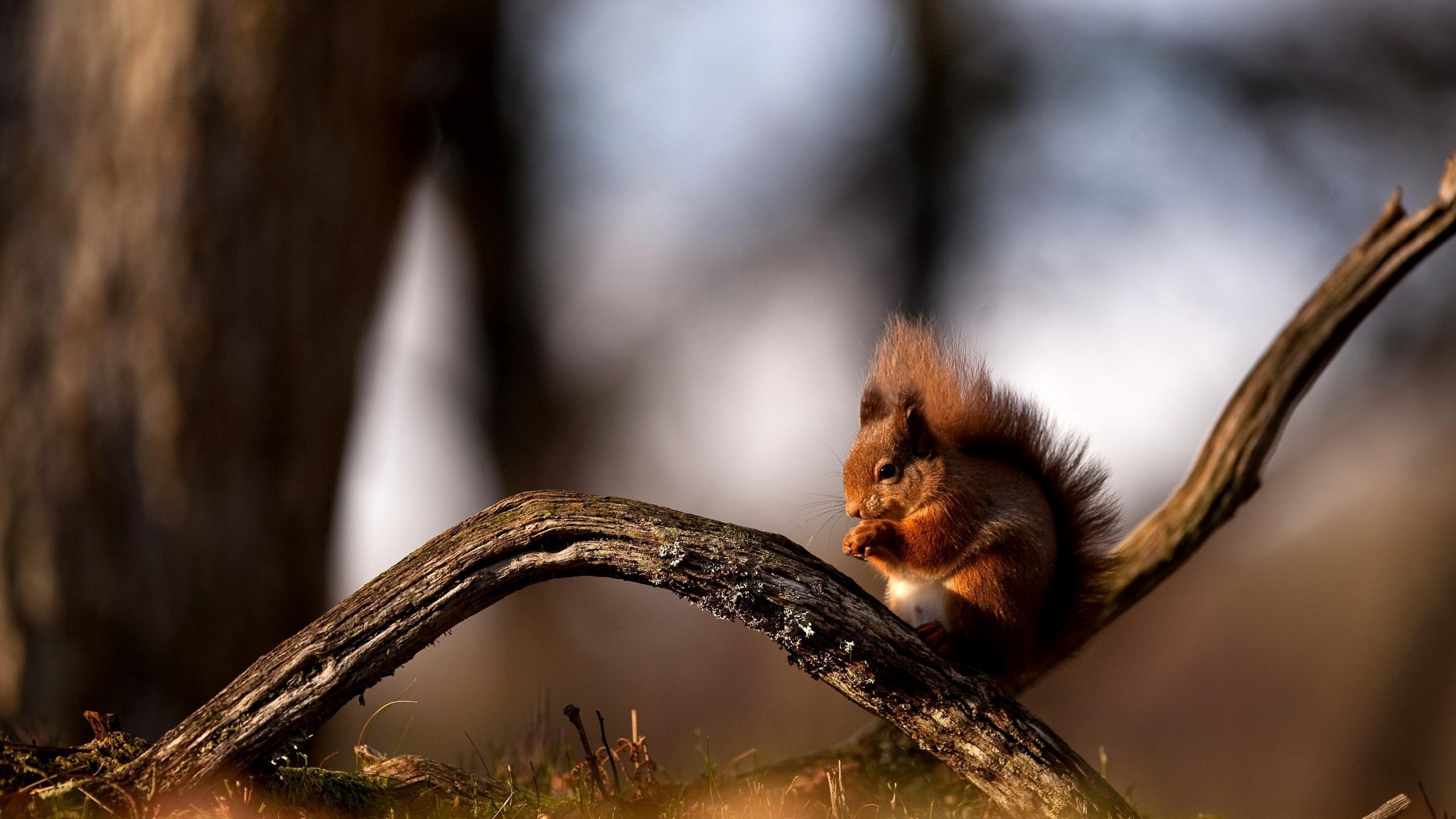 природа осень животное корзина семечки белка  № 2096014 бесплатно