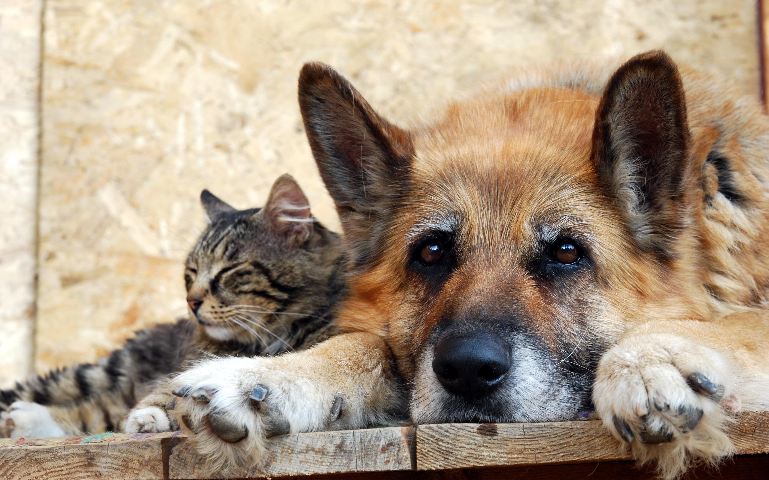 Про семью, картинки с кошками собачками