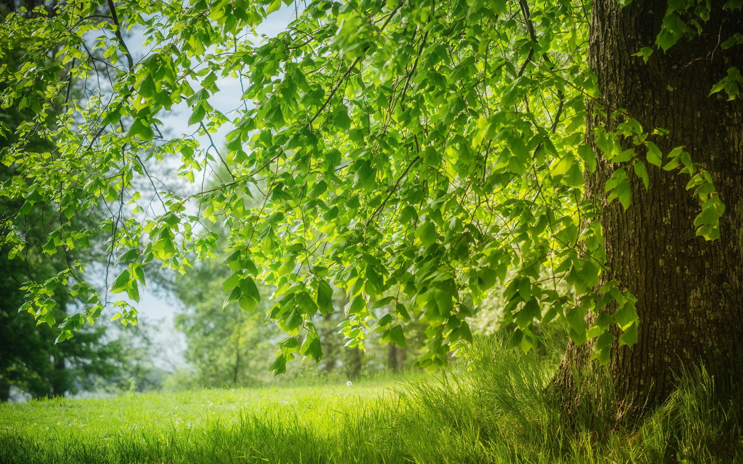 зелень лес деревья  № 1078720 без смс