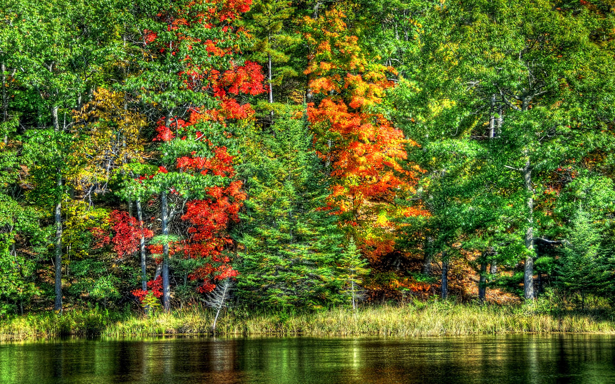 Лес озеро деревья  № 2404441 без смс