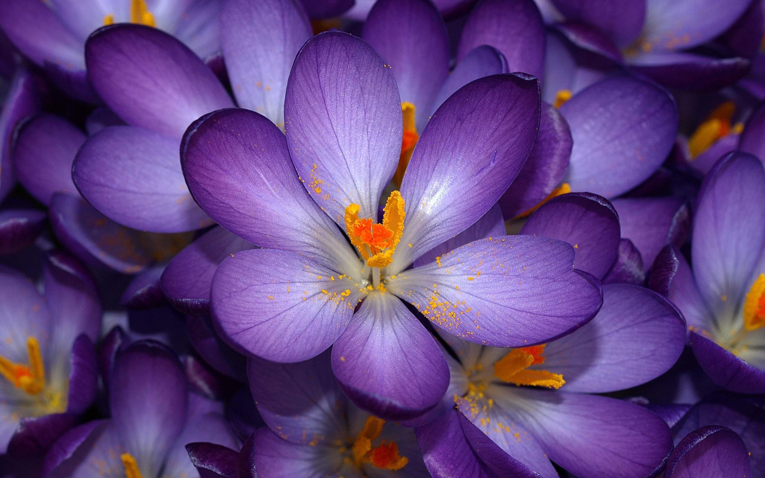 обычные картинки красивых цветов совпадения различия