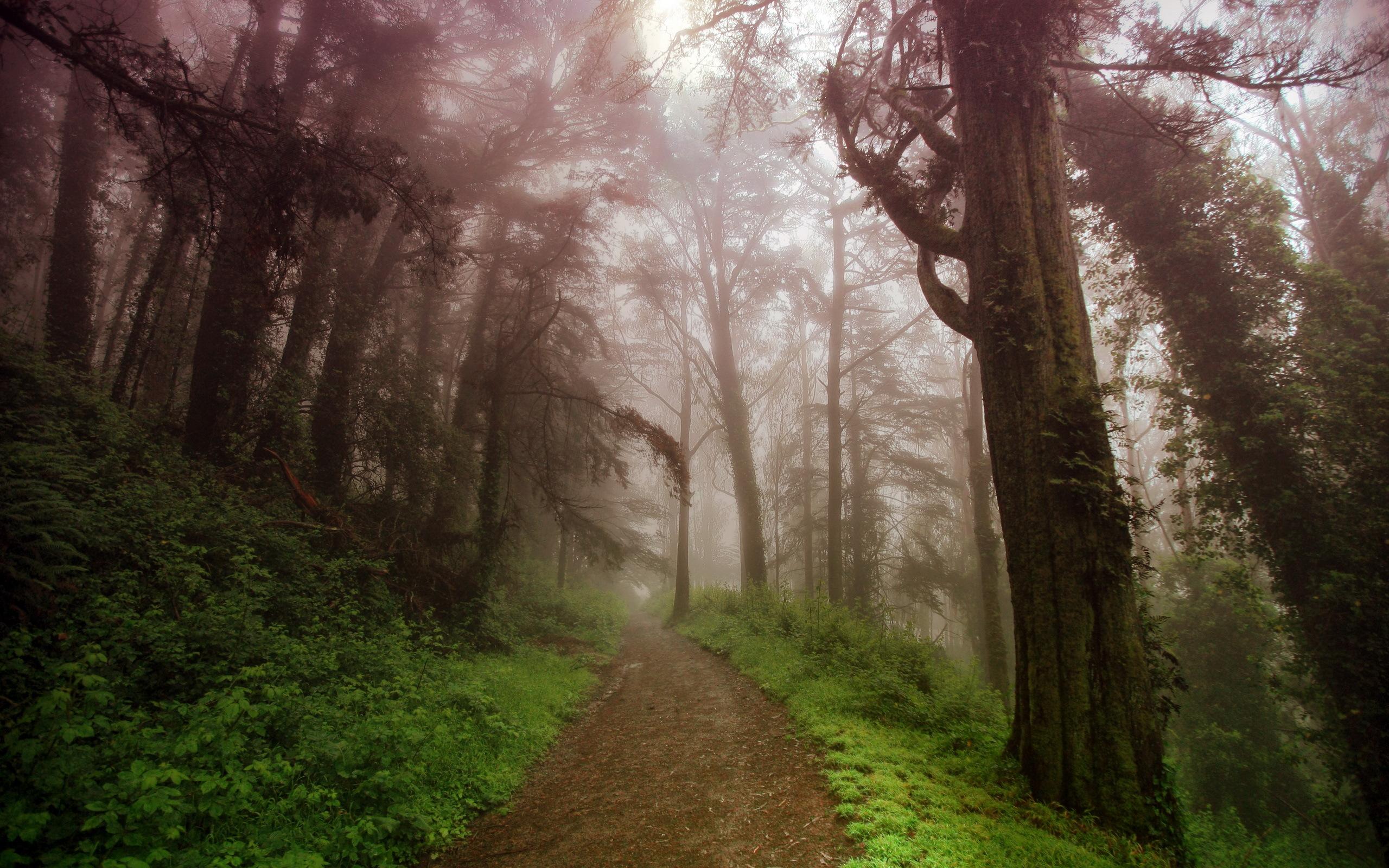 Картинки природа лес туман