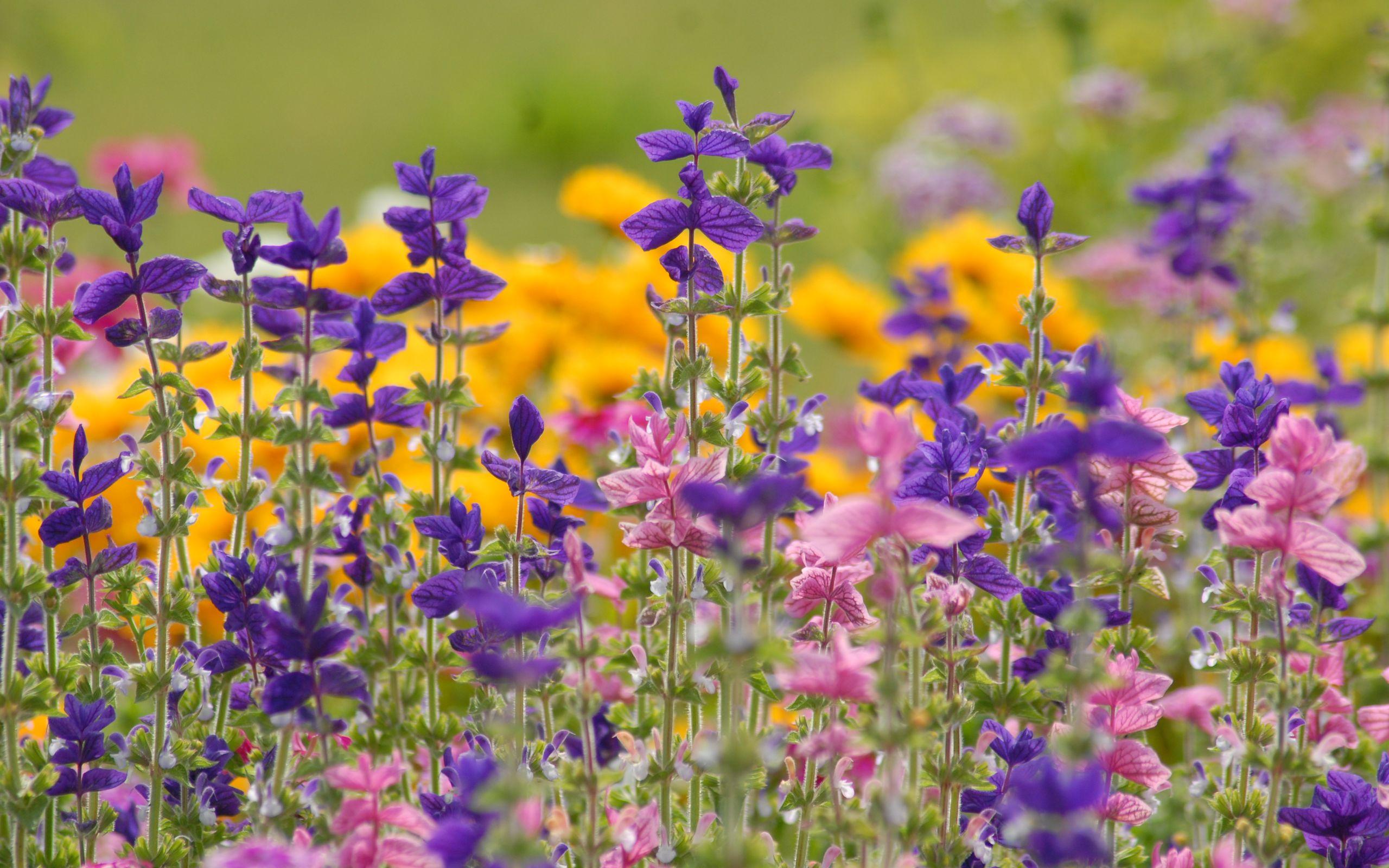 зря вертикальное фото цветы на фоне пейзажа полевые голосовые