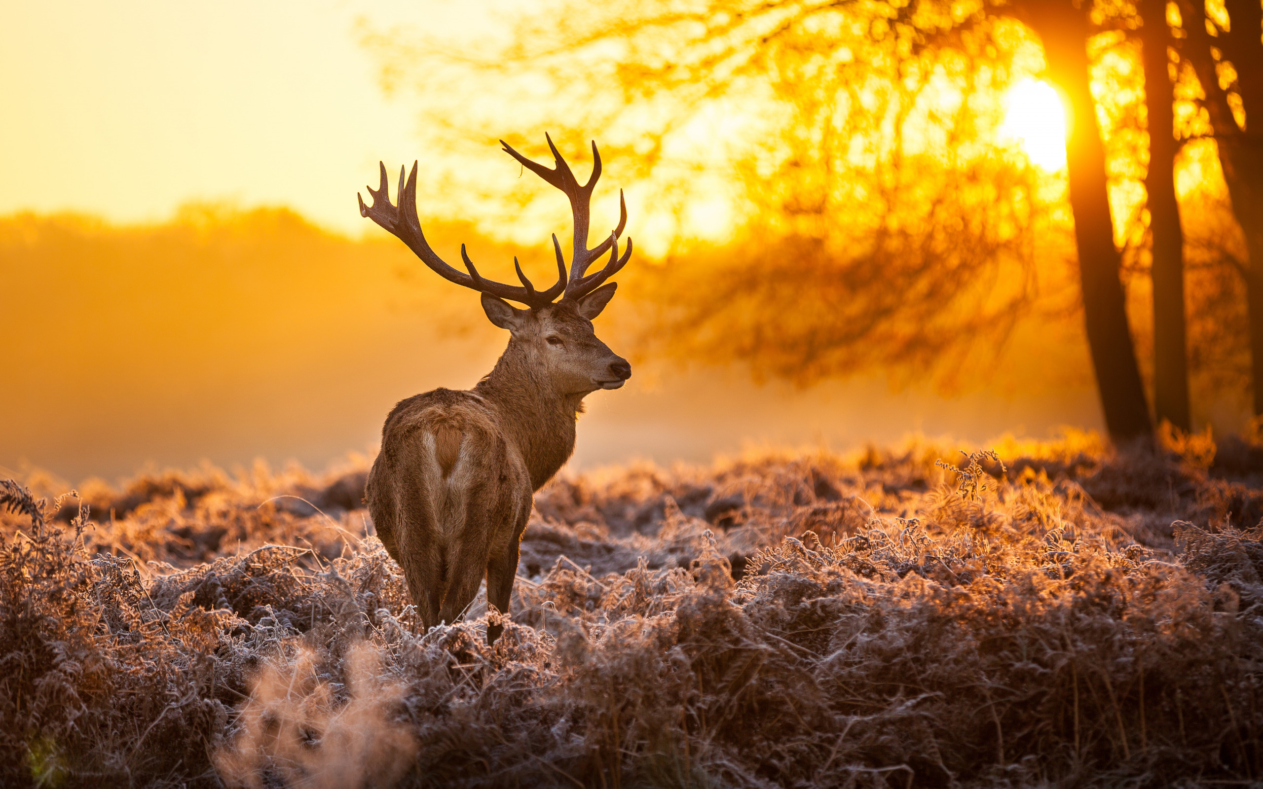 Картинки с изображениями животных пейзажей для рабочего стола онлайн