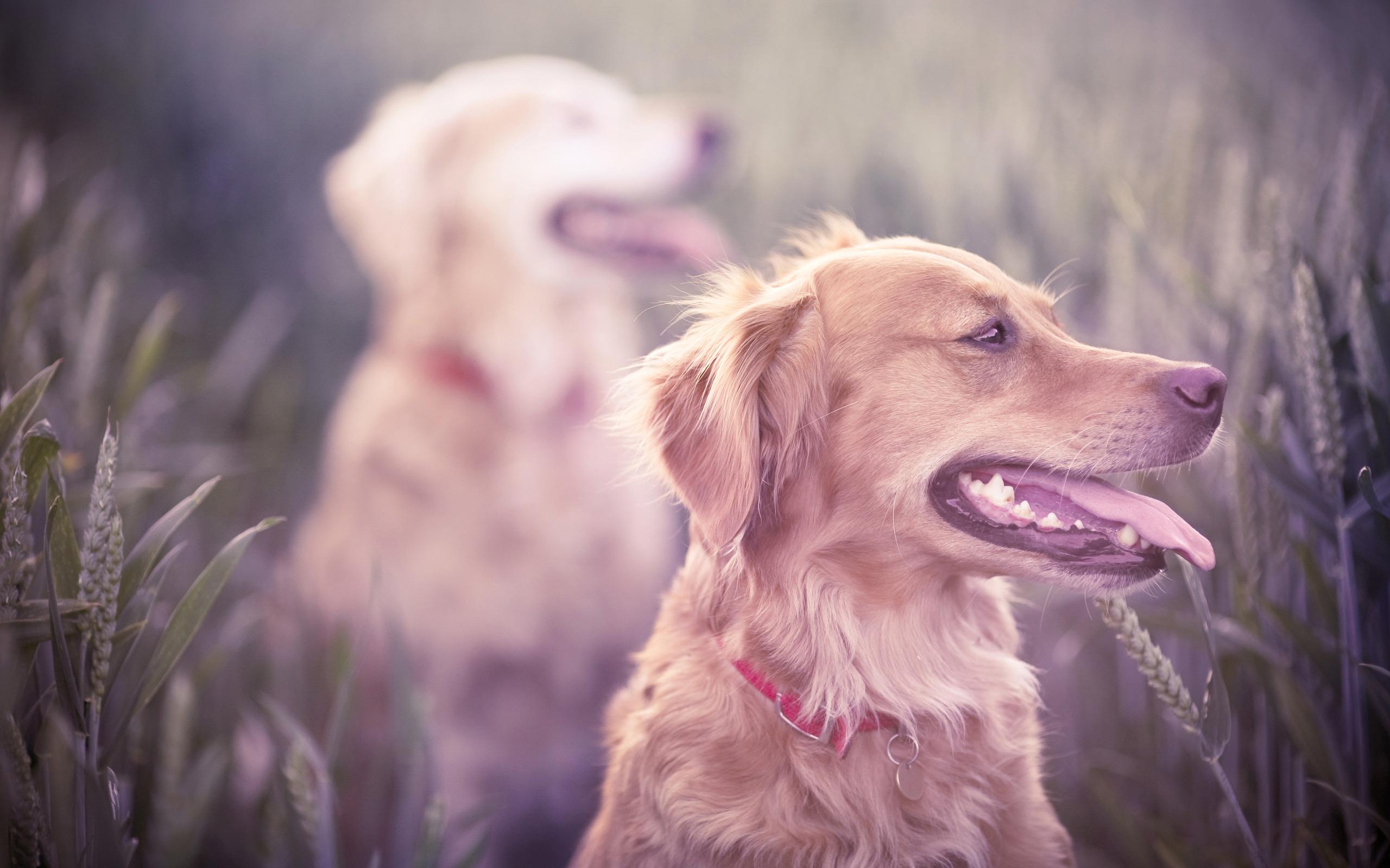 пёс язык собака на бревне  № 2524102 загрузить