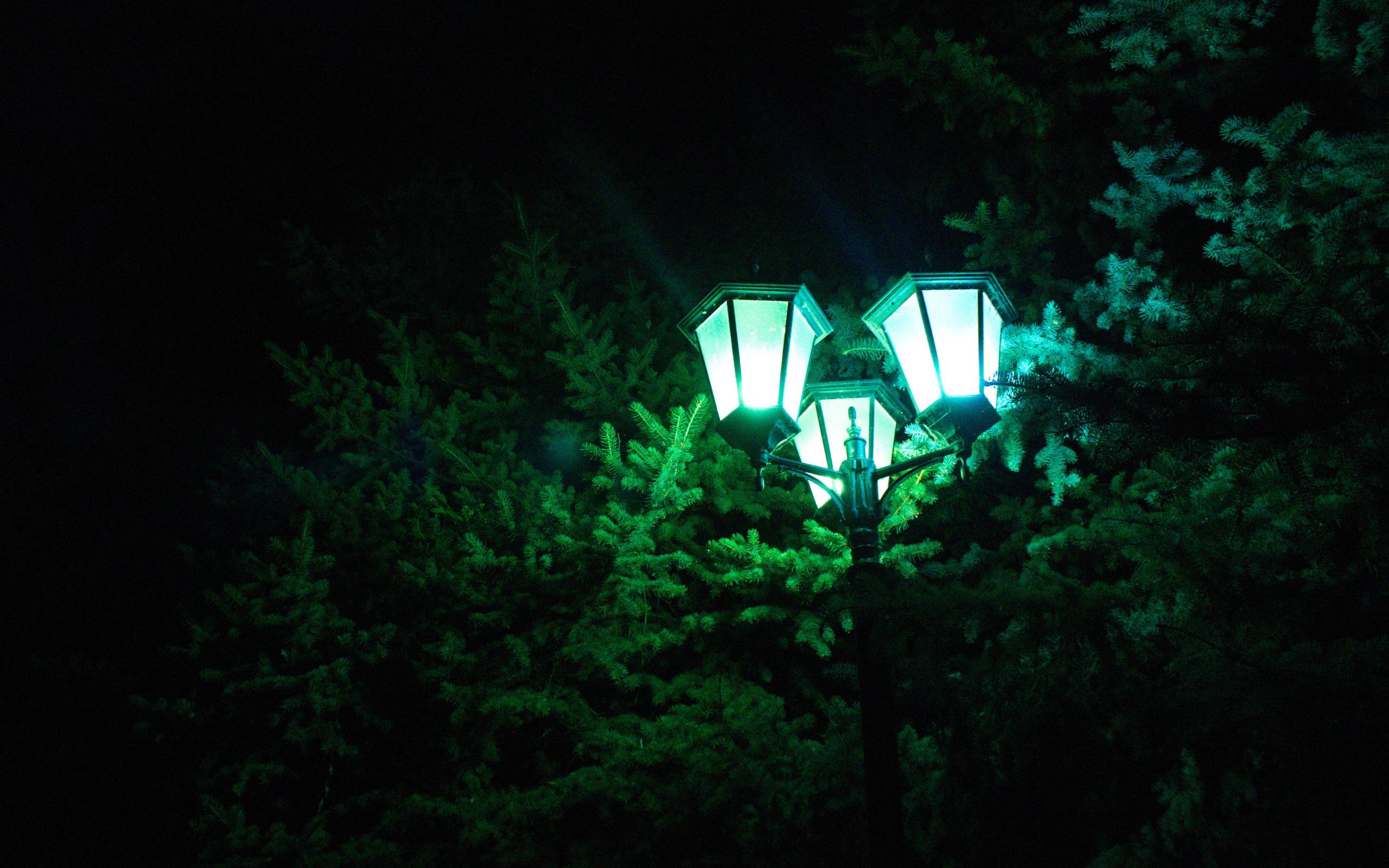 Картинки лесные фонари