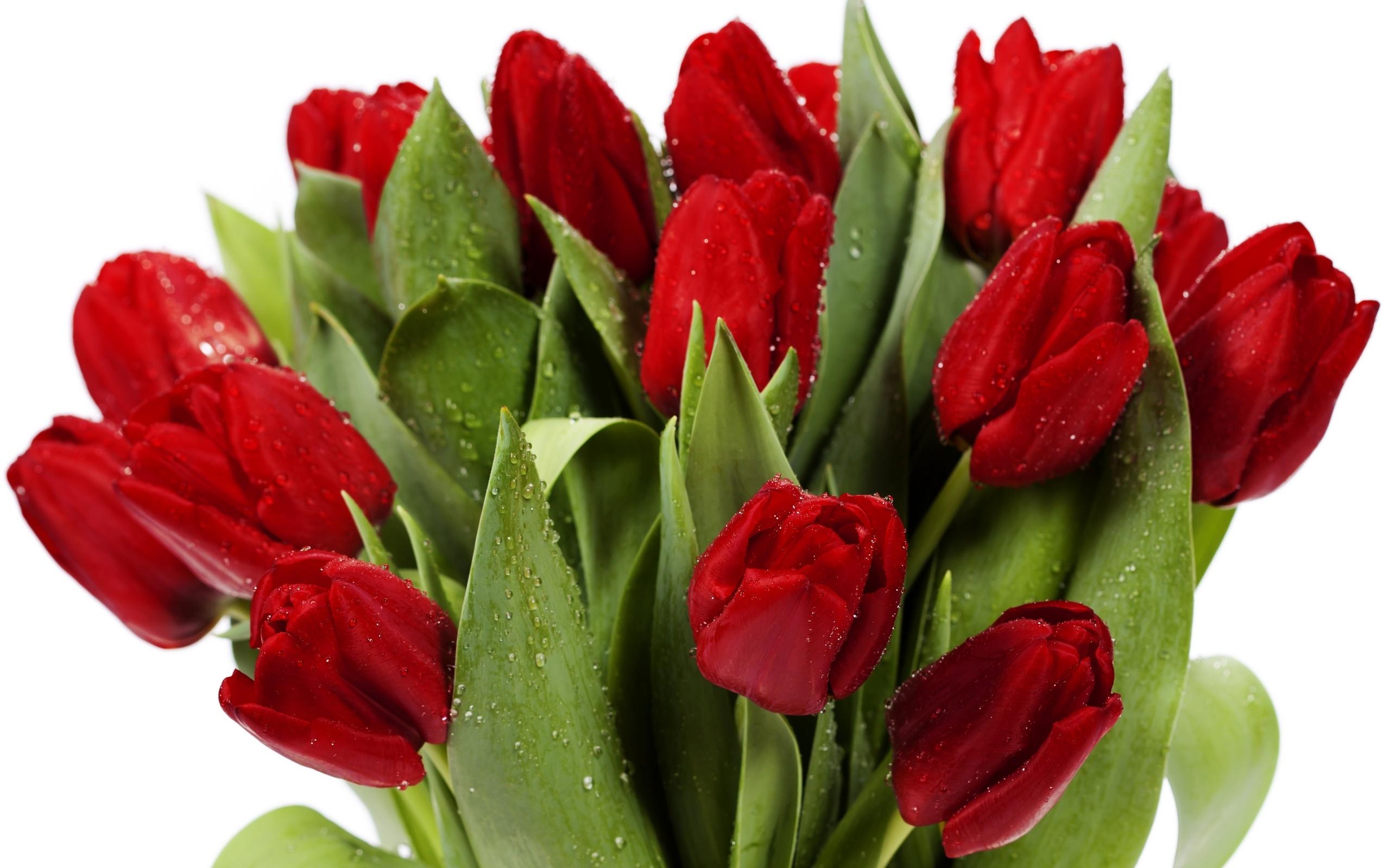 Интернет другу, картинки цветы тюльпаны красивые