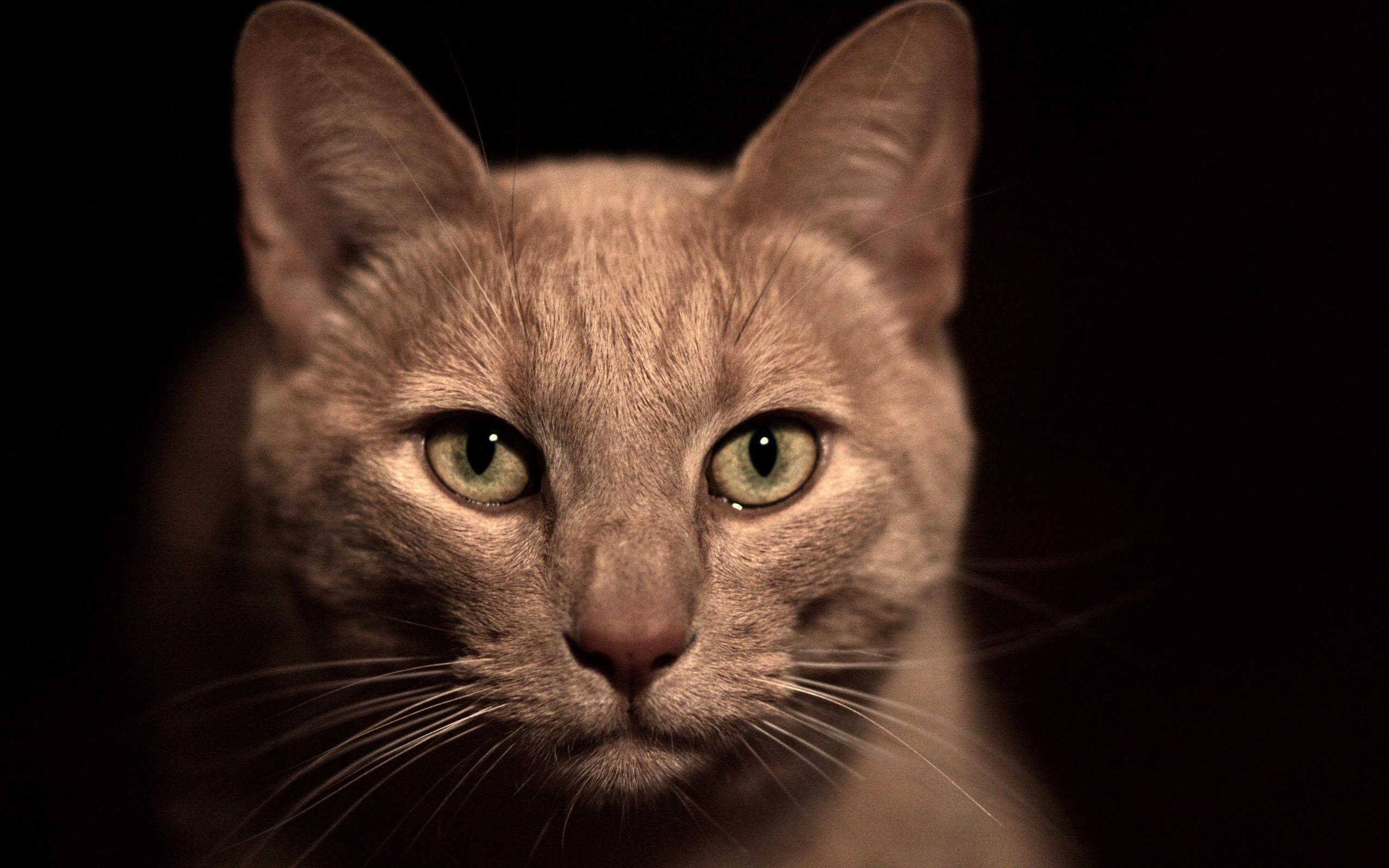 кот животное кресло морда  № 1943839 загрузить