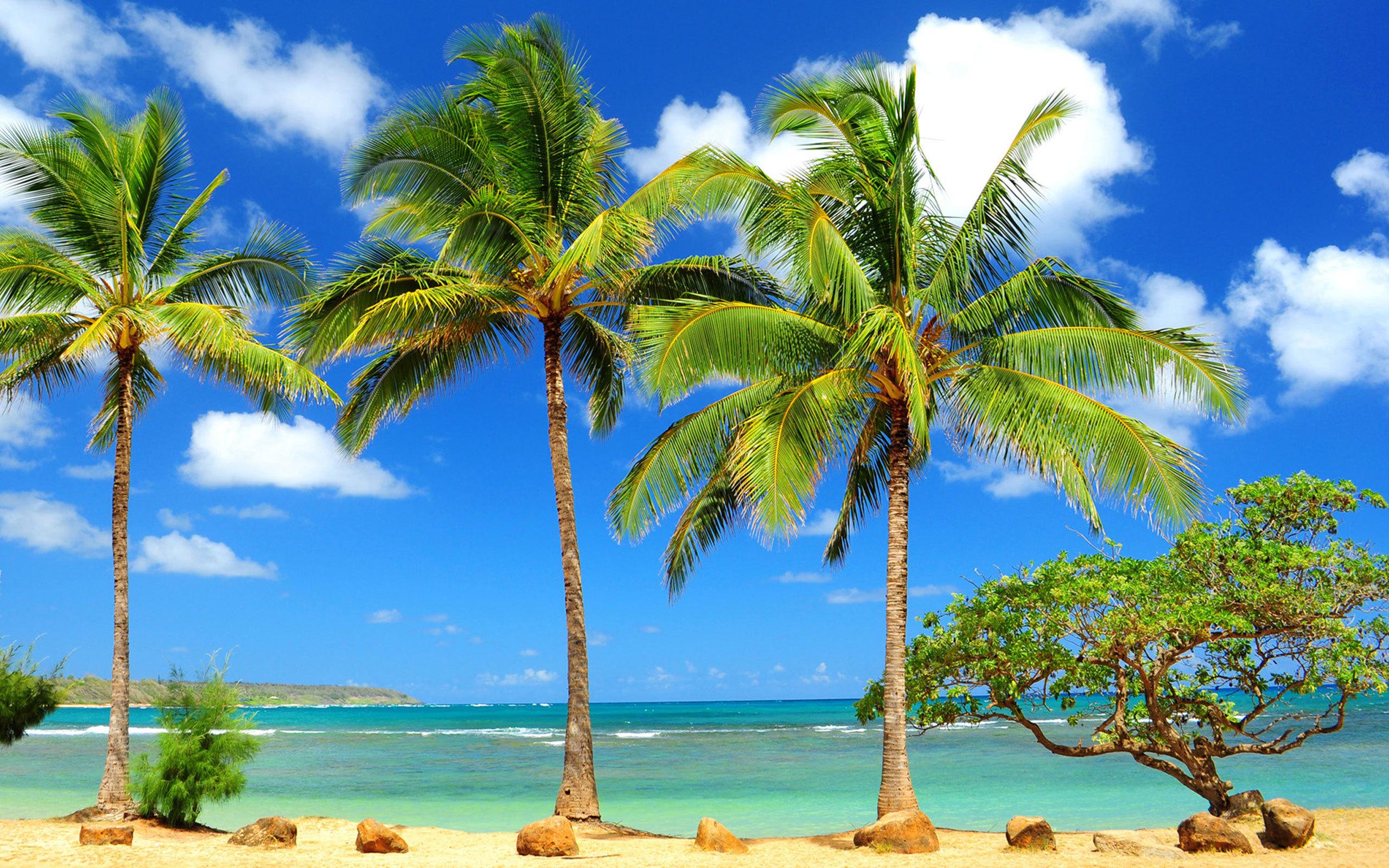фотографии на рабочий экран пальмы прошлом
