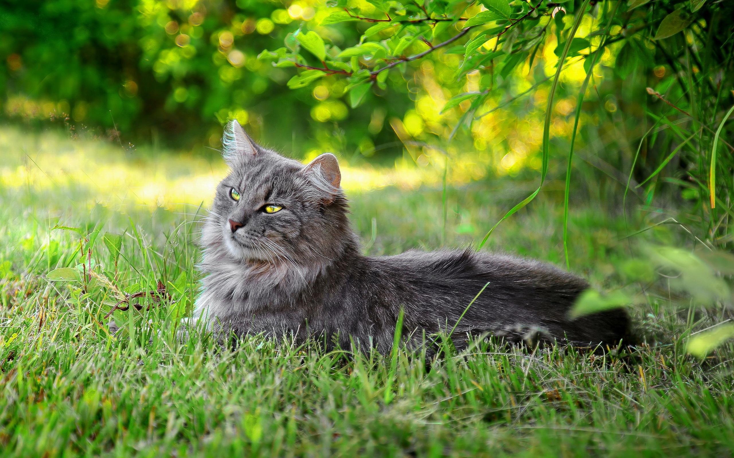 природа животные кот котенок серый журавлики nature animals cat kitten grey cranes  № 654616 бесплатно
