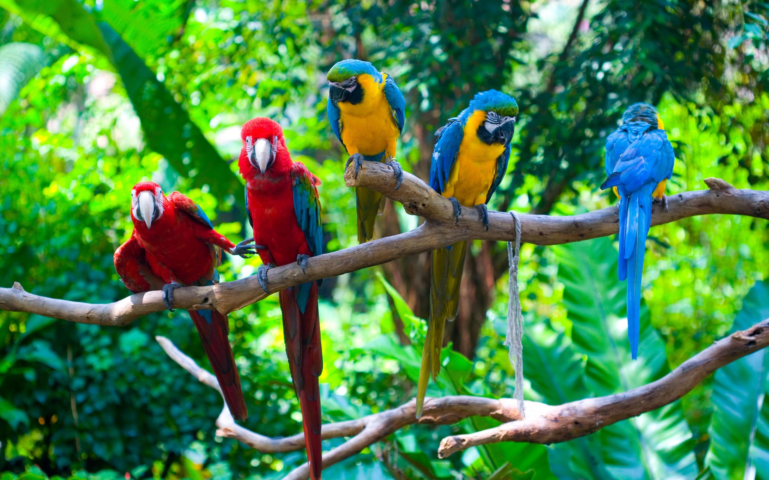 картинки про птицы животные можете ознакомиться