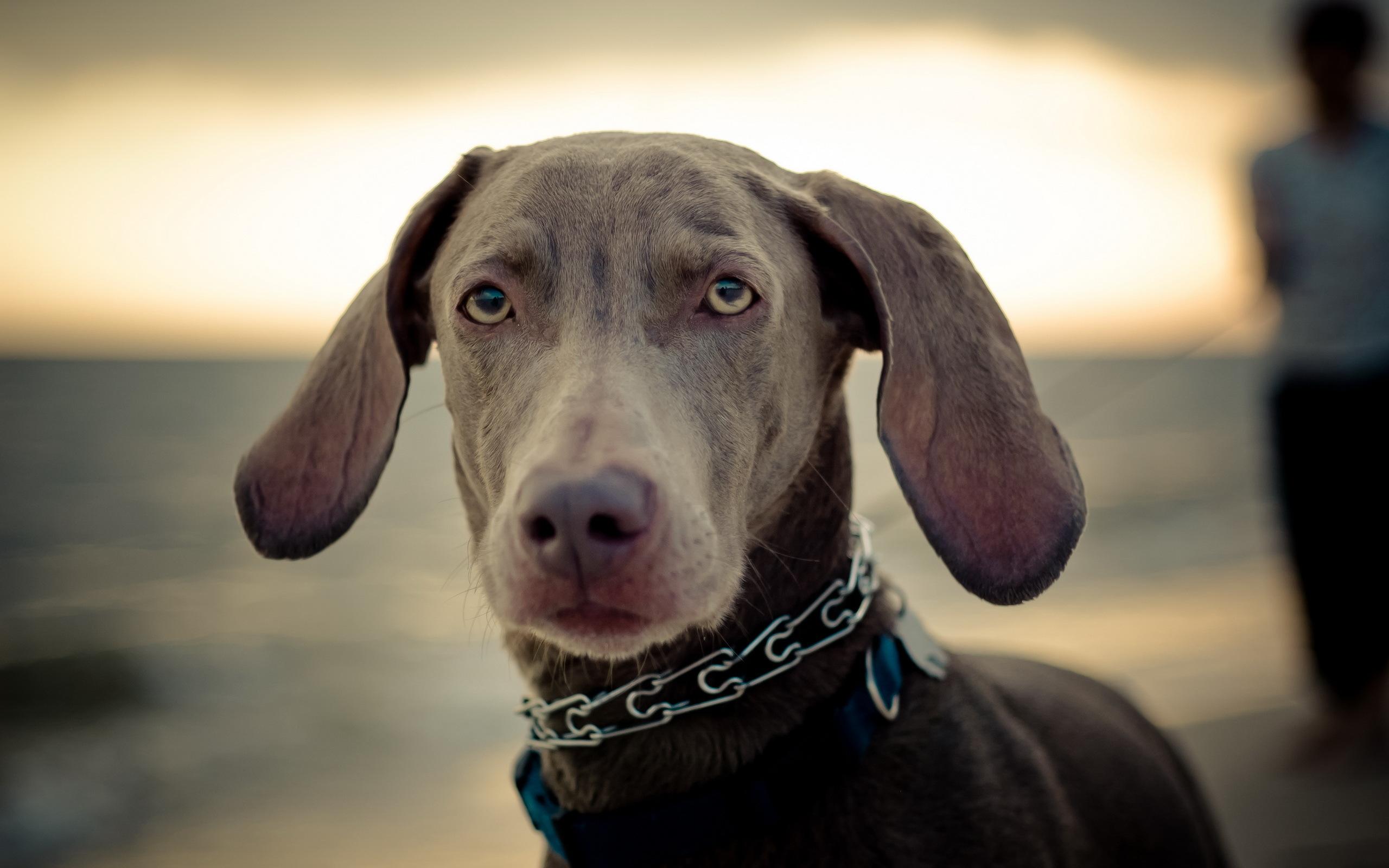 собака пёс взгляд морда dog view muzzle  № 690741  скачать