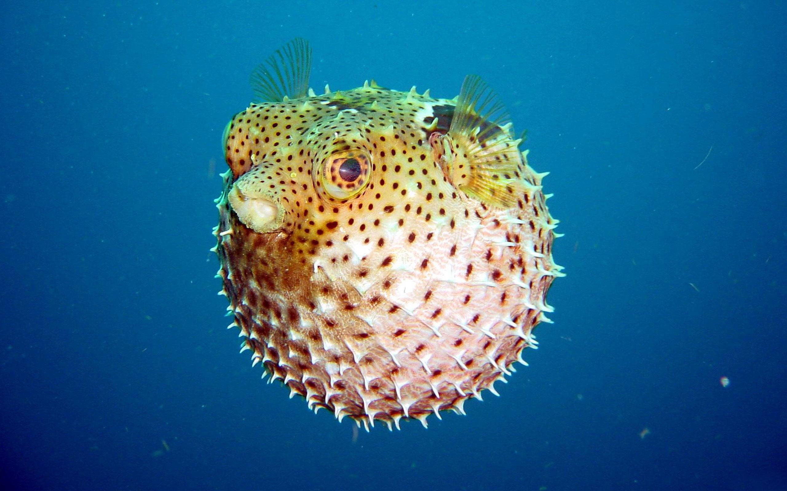Смешные картинки подводного мира