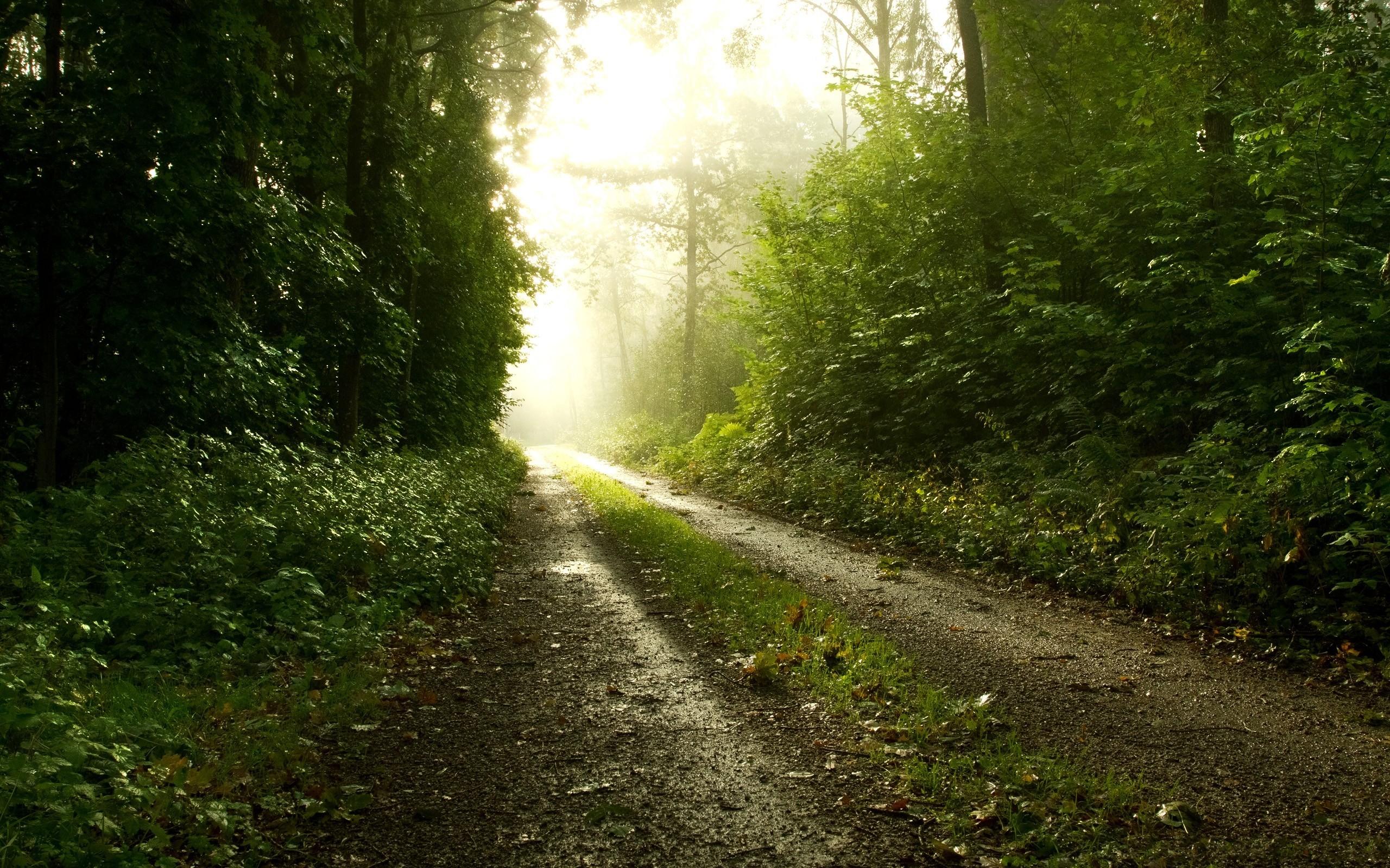 дорога, солнце, трава, деревья  № 3117745 бесплатно