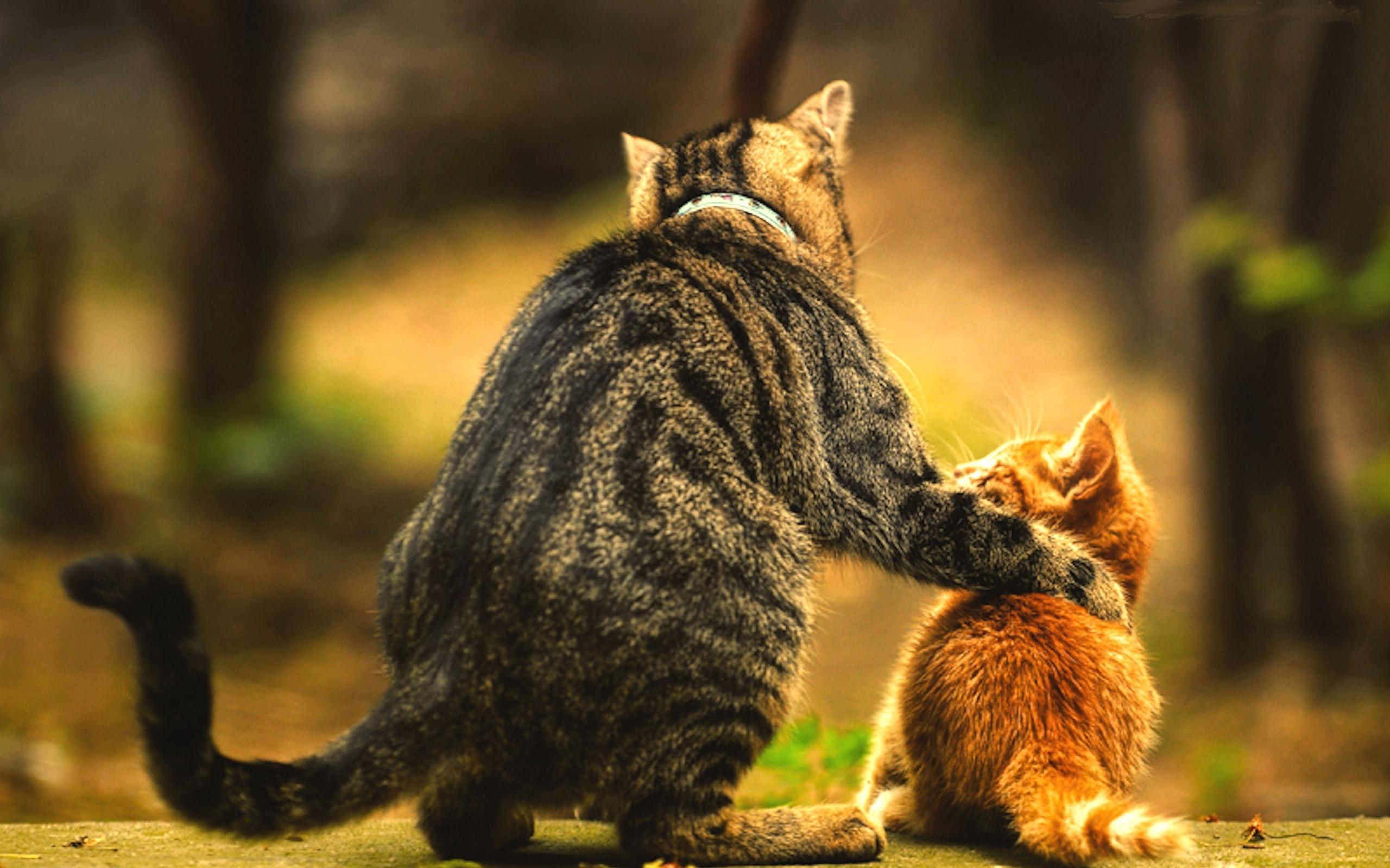 фото красивых котиков со смыслом схемы для вышивки