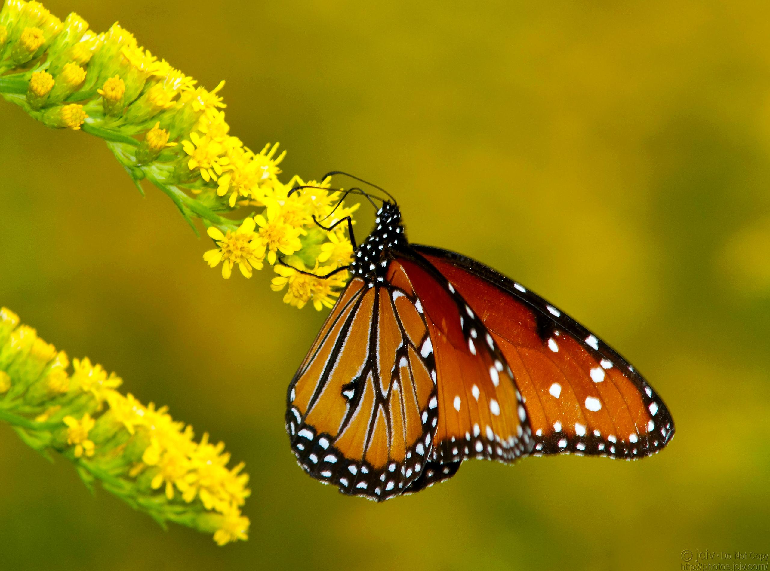 Бабочки подлетающие к цветкам  № 2991782 загрузить
