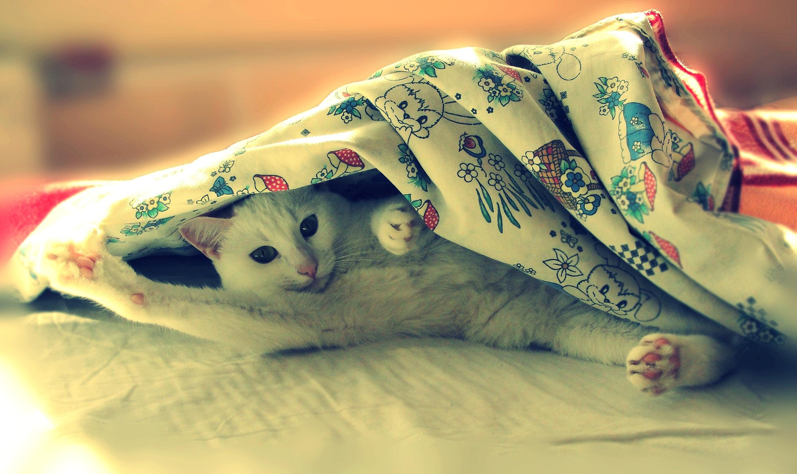 кошка зеленые глаза постель  № 3655477 загрузить