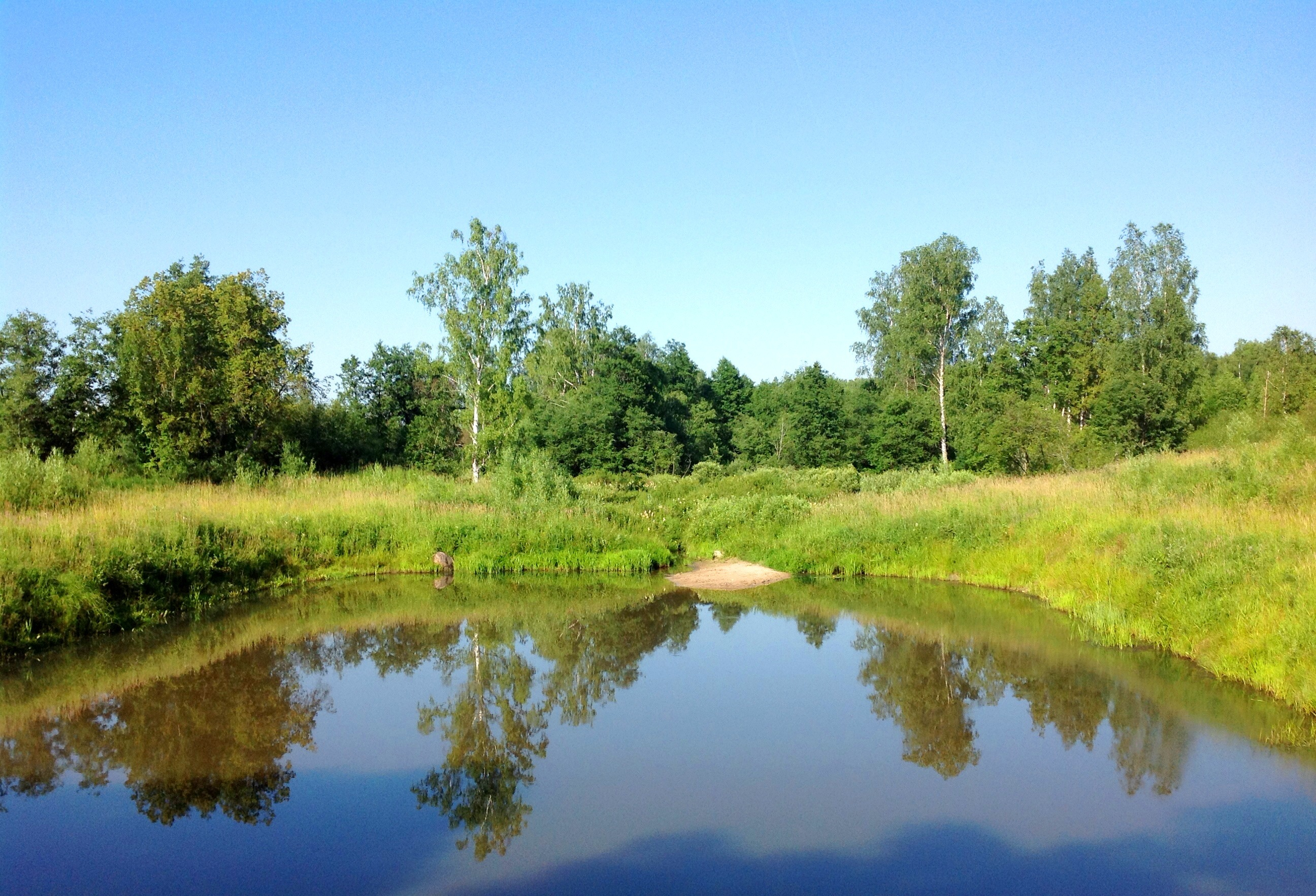 Берег озера в траве  № 2482650  скачать