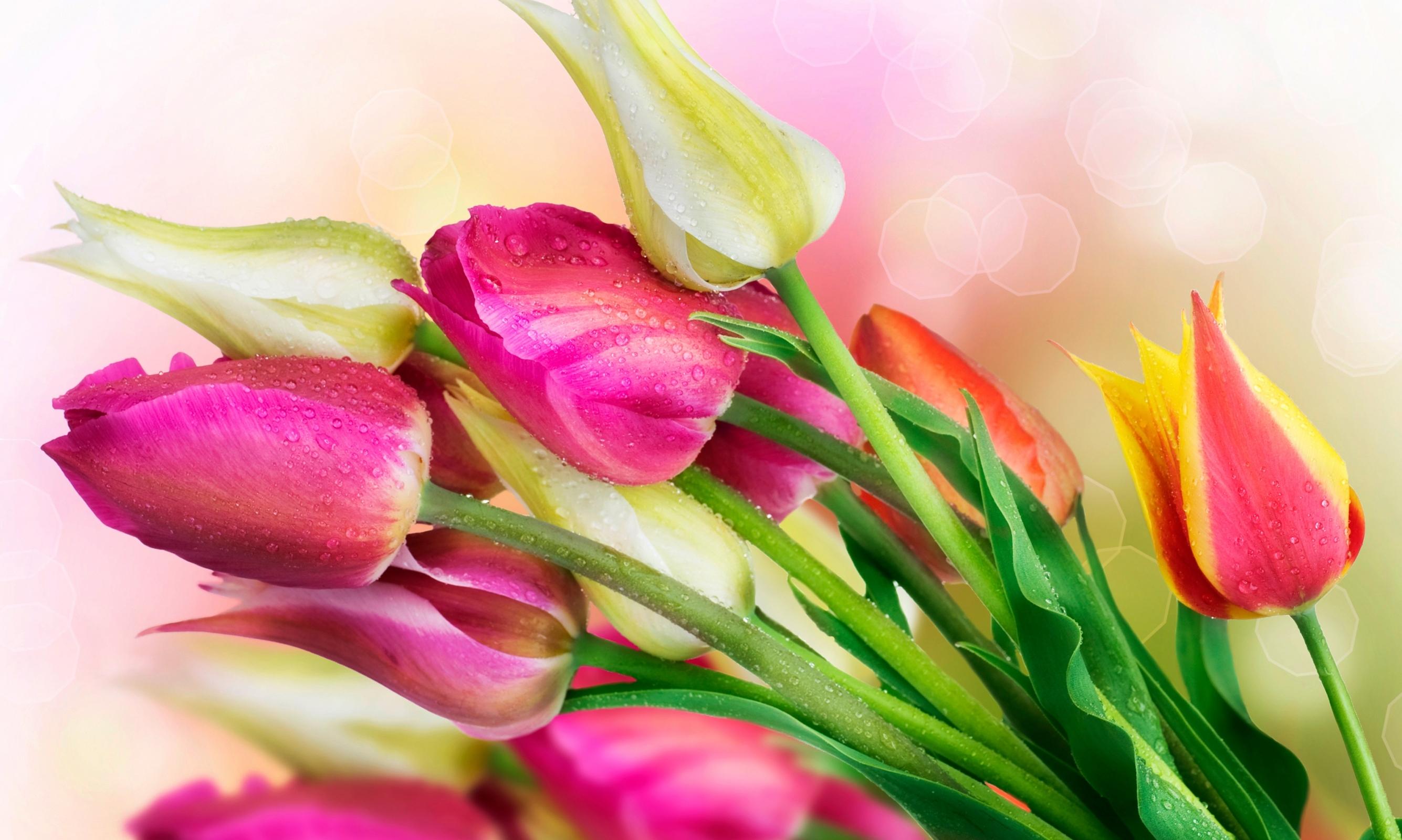 Дню учителя, открытки ко дню рождения-тюльпаны