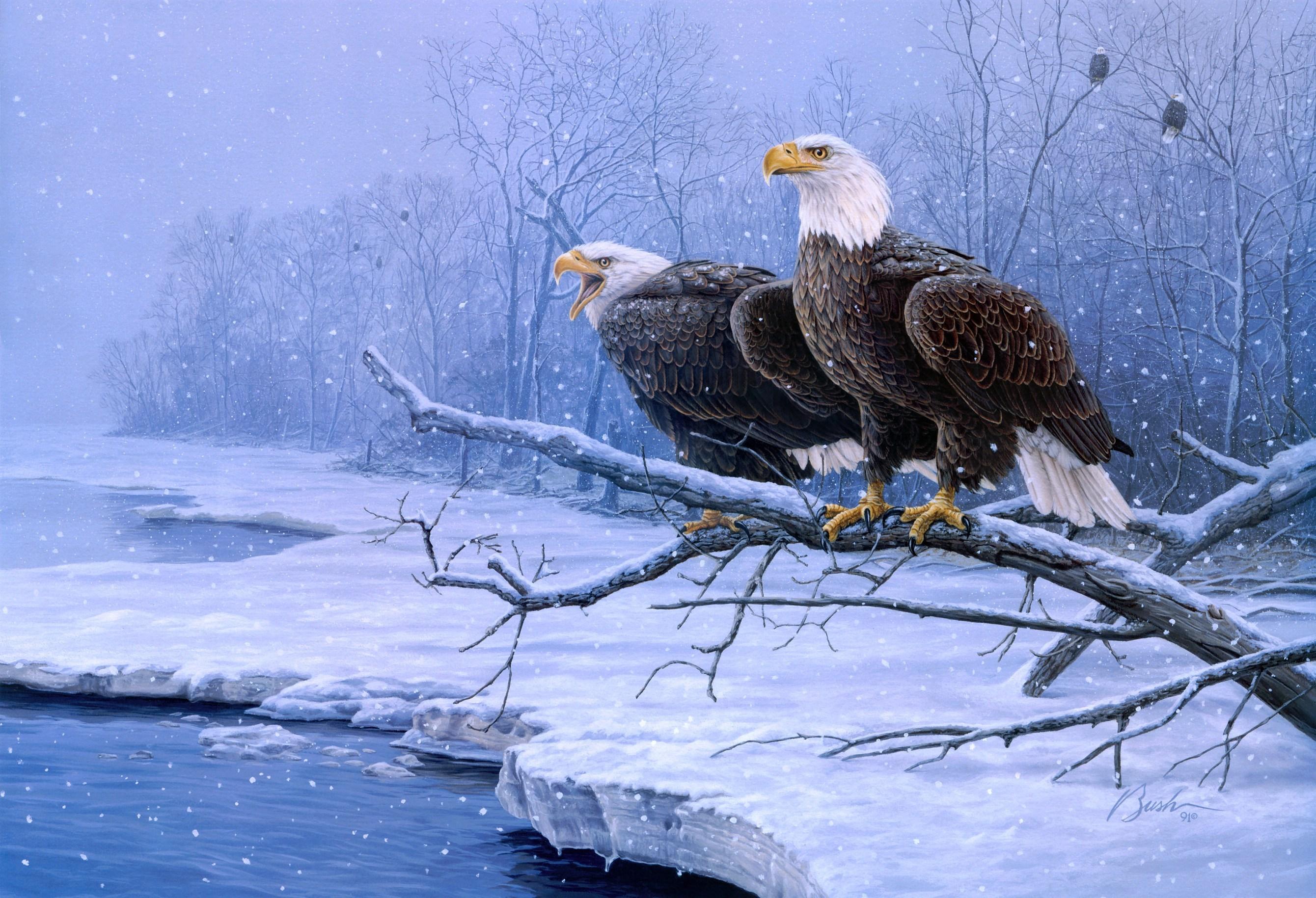 Картинки животные и птицы зимой, свадьба никах